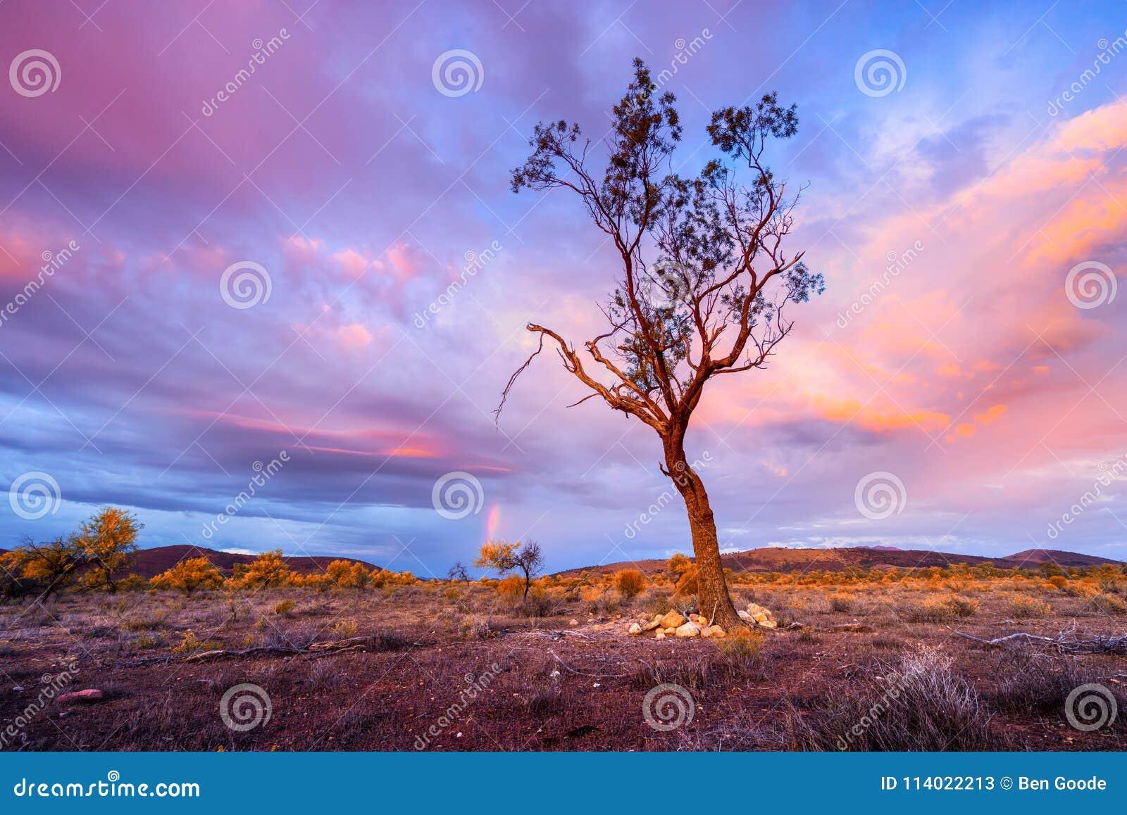 Soluppgångträd