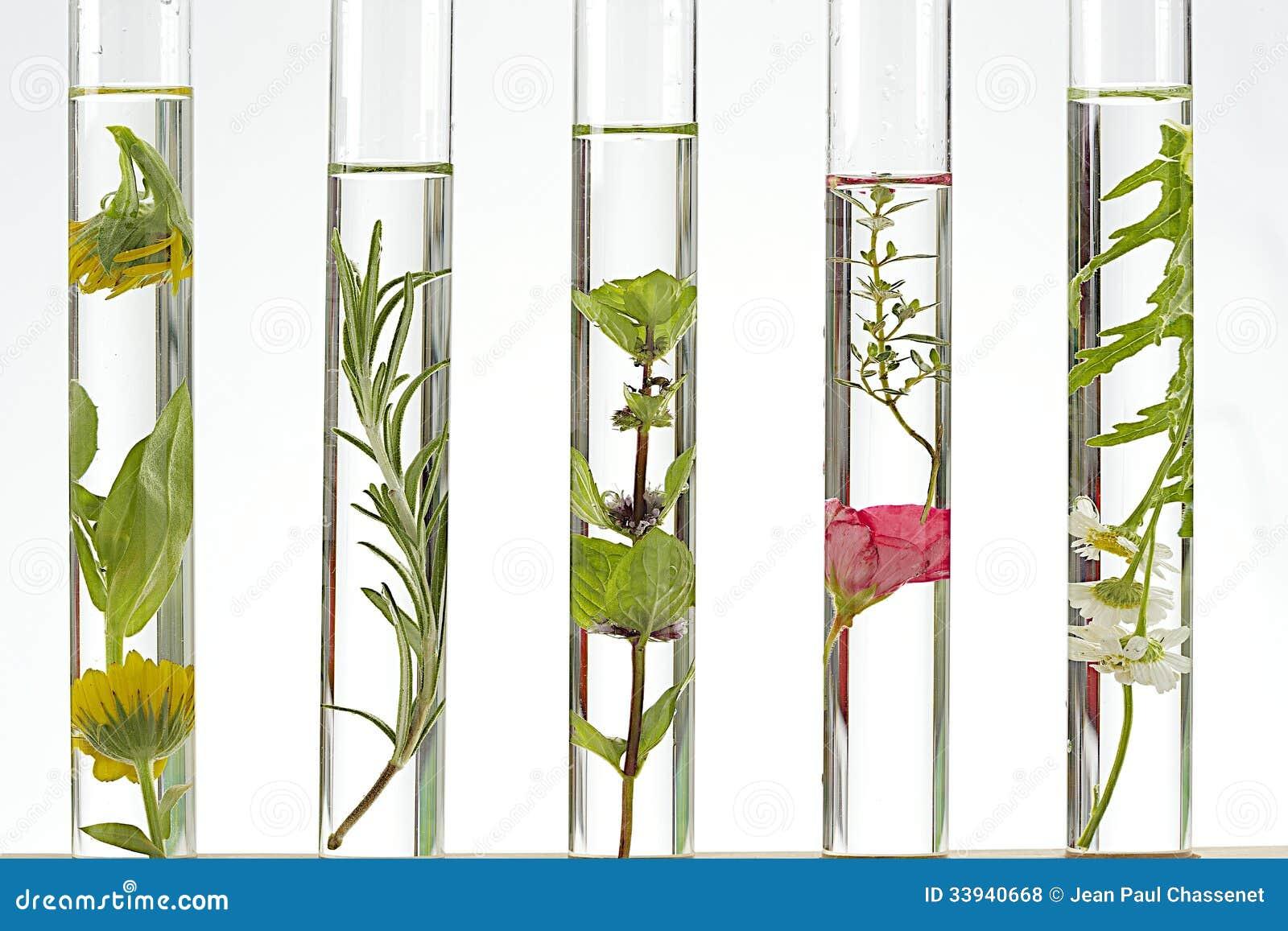 Soluzione di pianta medicinale e di fiori