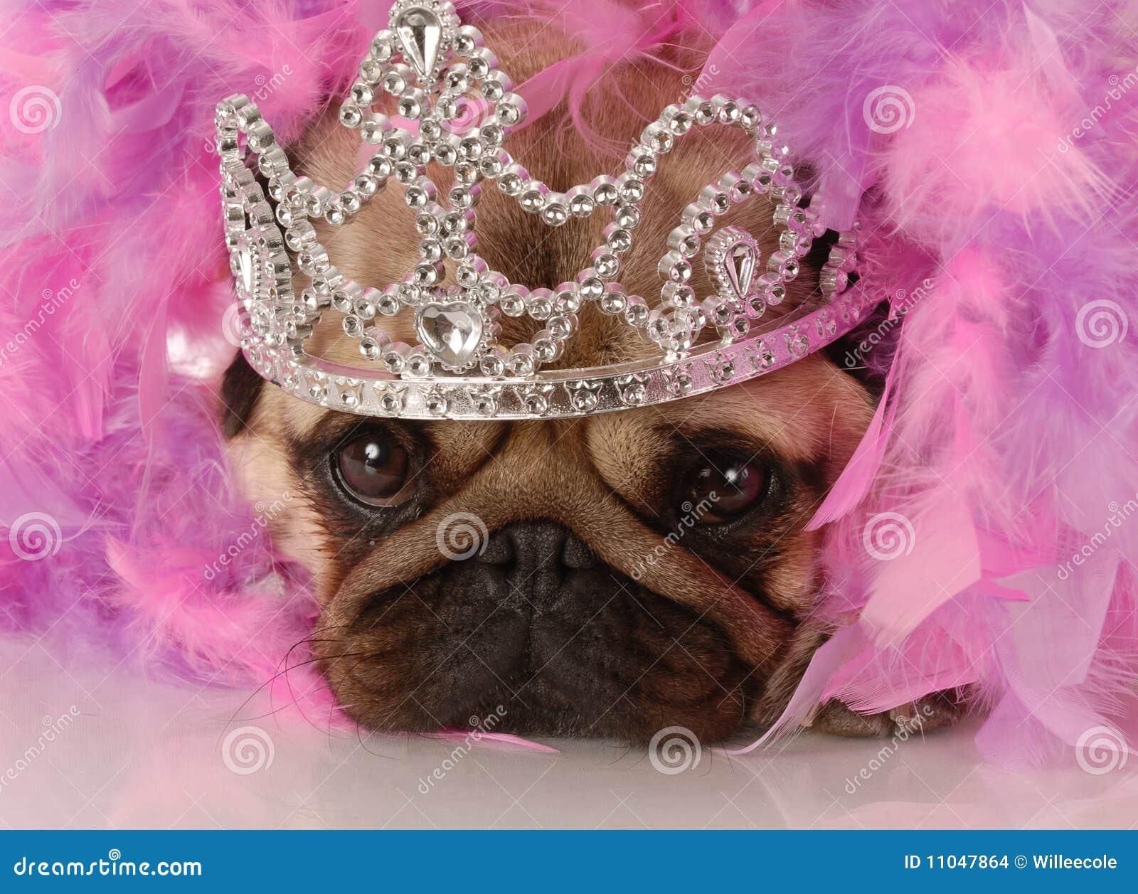 Som hund klädd princess upp