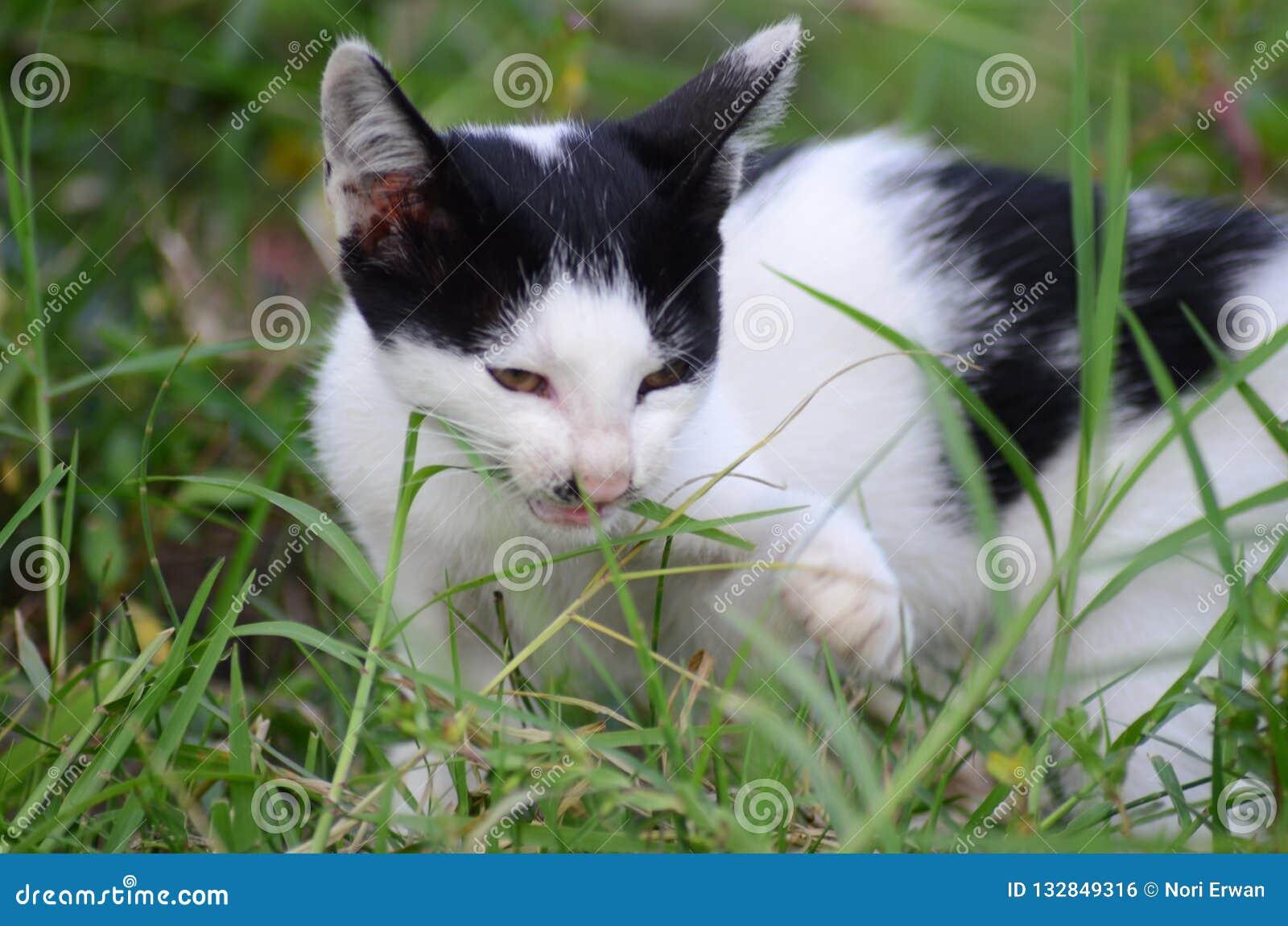 Som synes gillar katter också att äta gräs