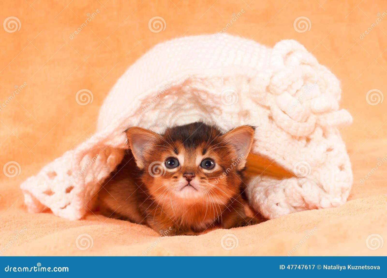 Somalisch katje onder hoed