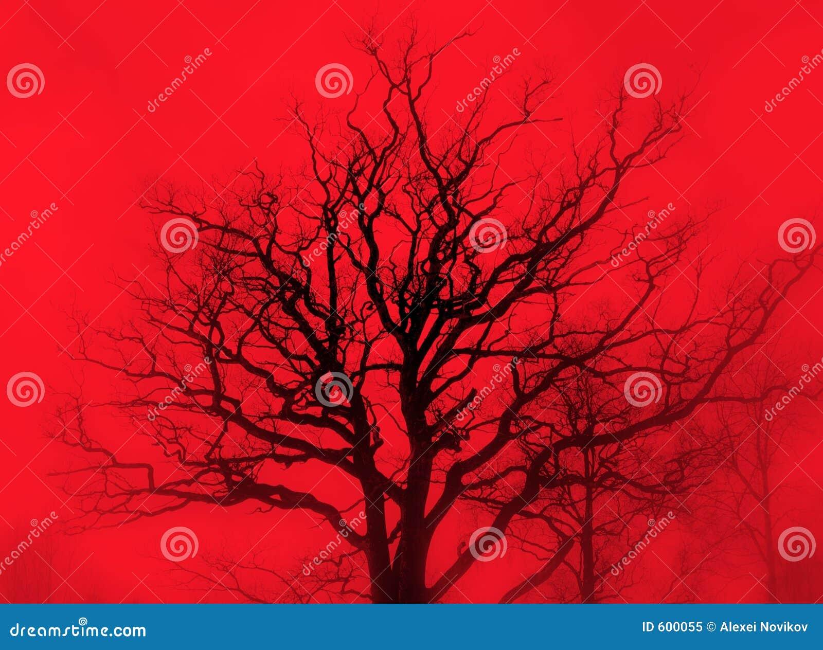 Sombere eik in rode mist