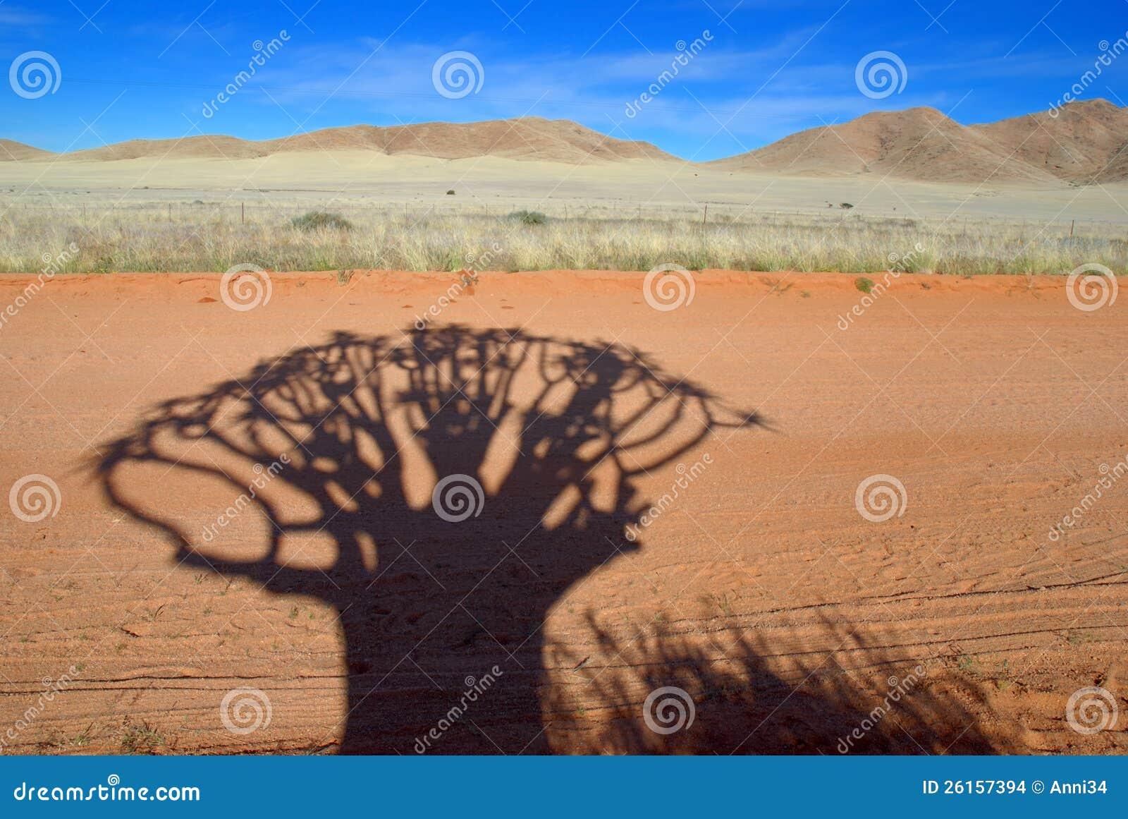 Sombra de Kokerboom