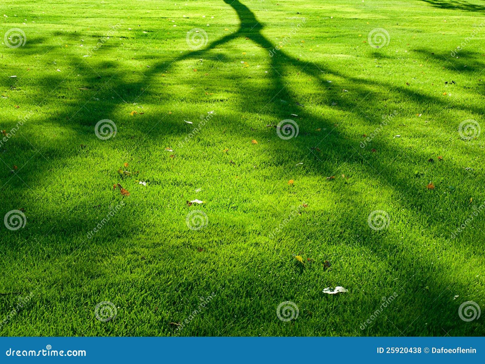 Sombra de un árbol