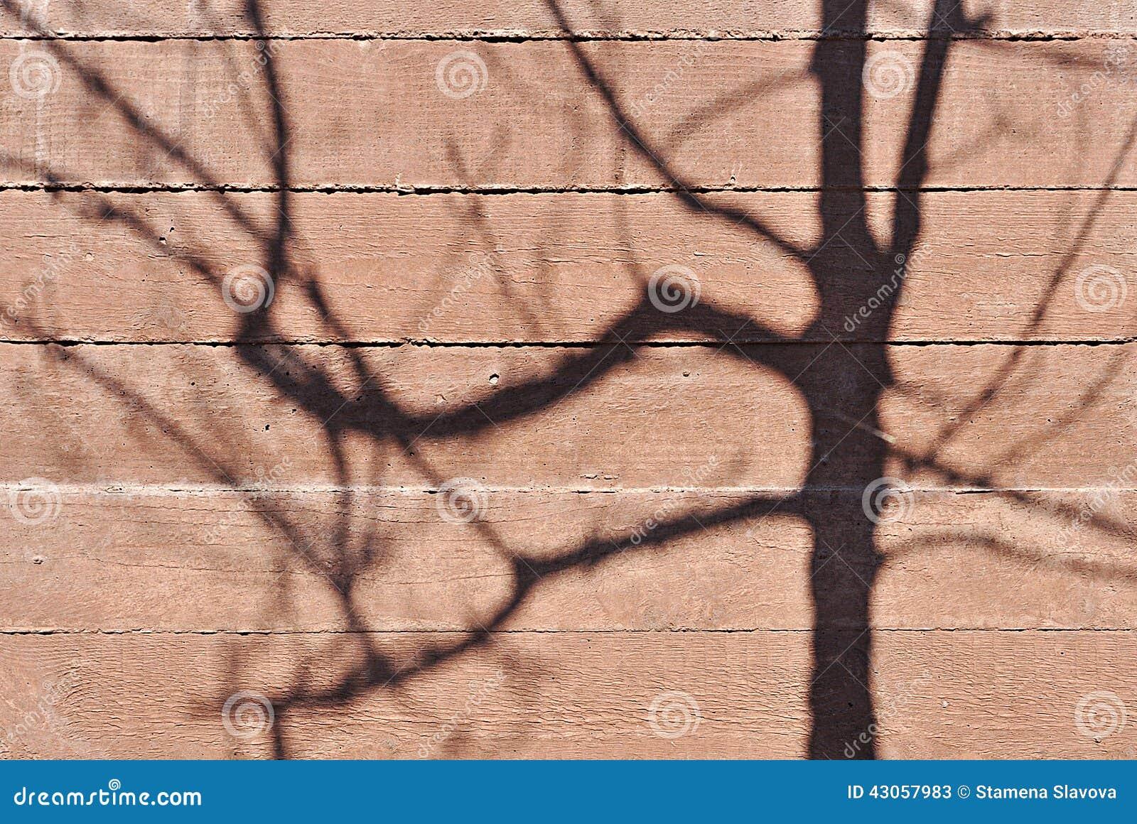 Sombra del árbol