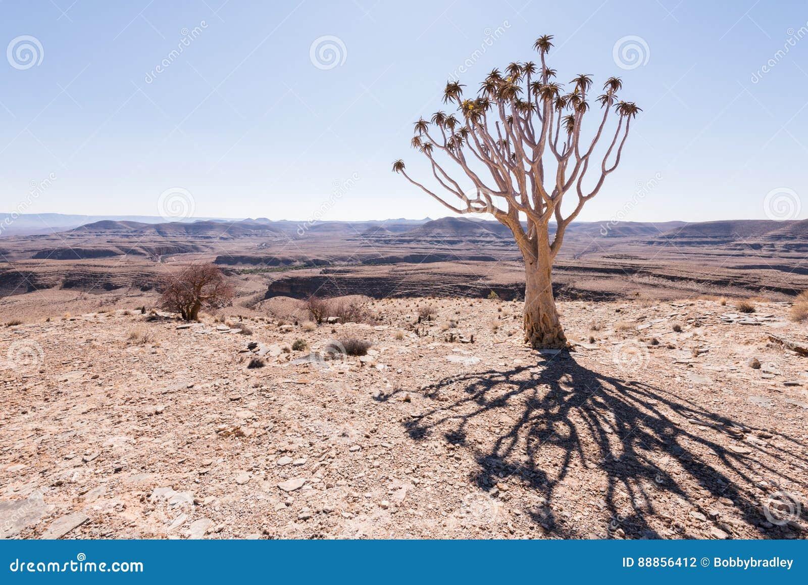 Sombra del árbol del estremecimiento