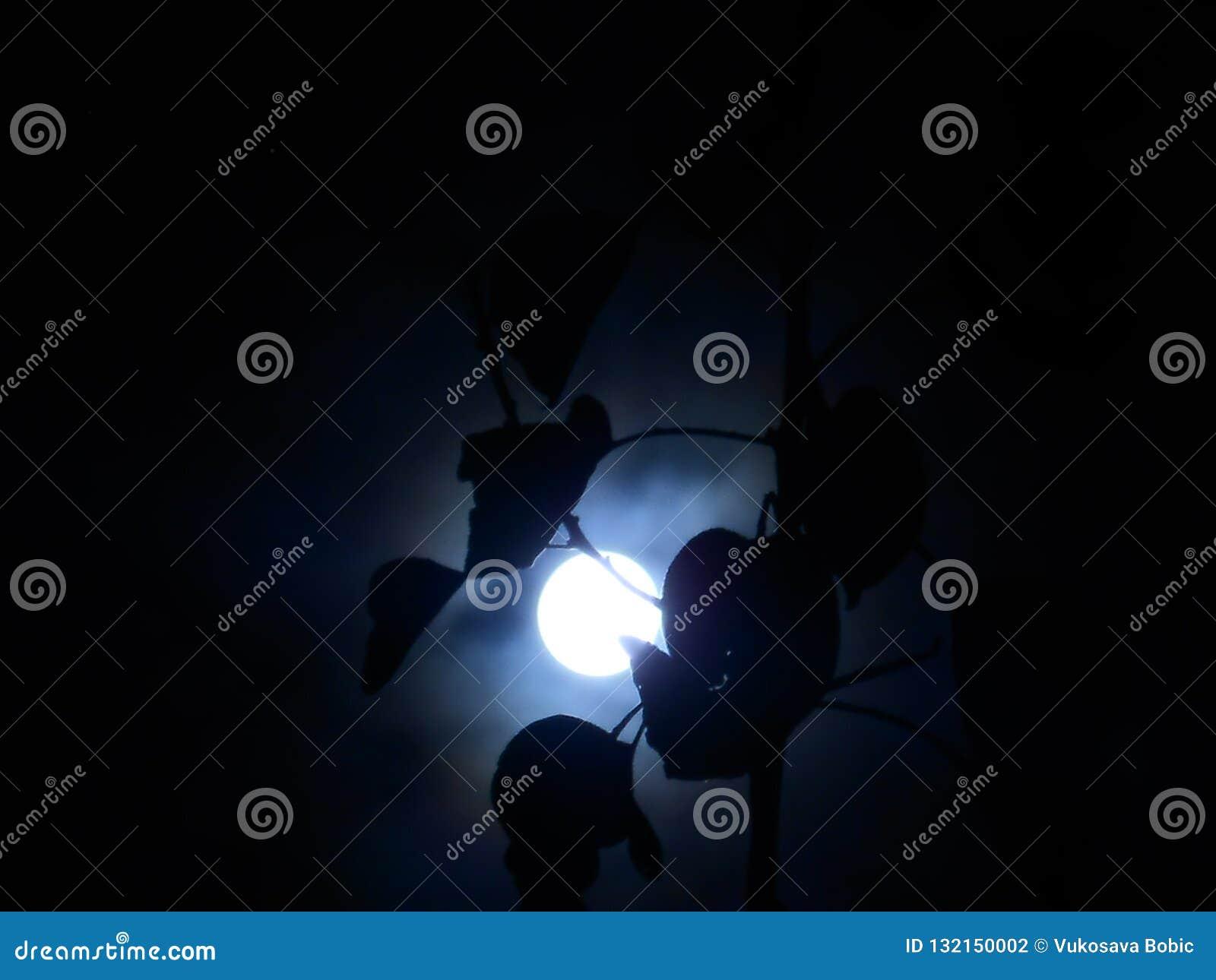 Sombra del claro de luna
