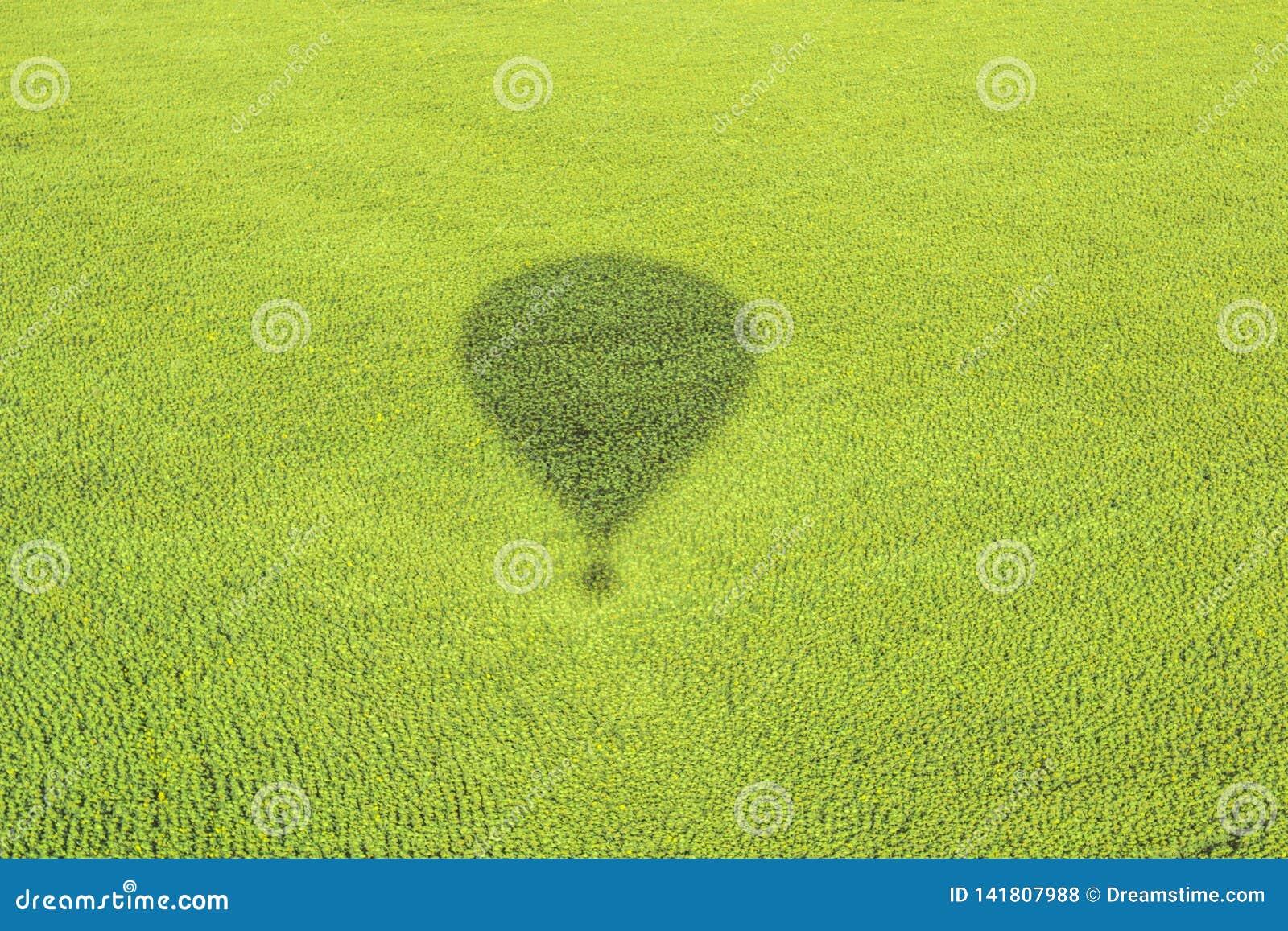 A sombra do balão e da natureza