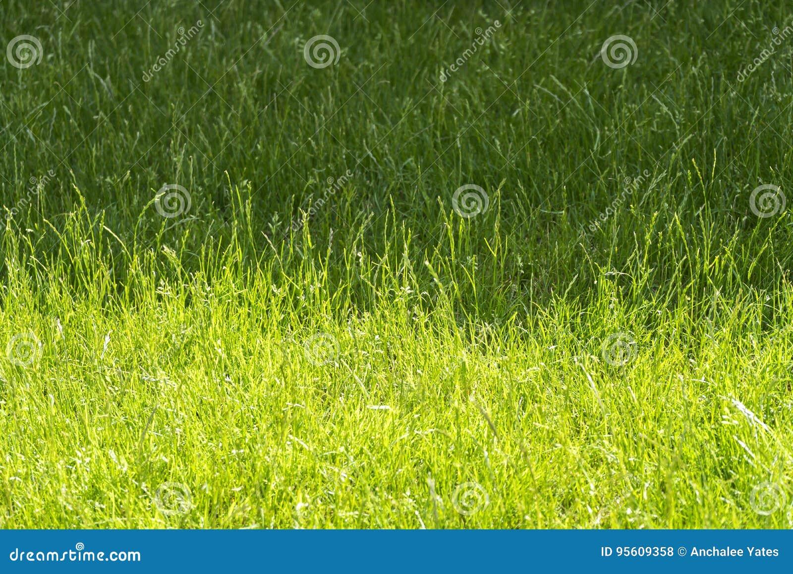 Sombra y sombra del prado en soleado