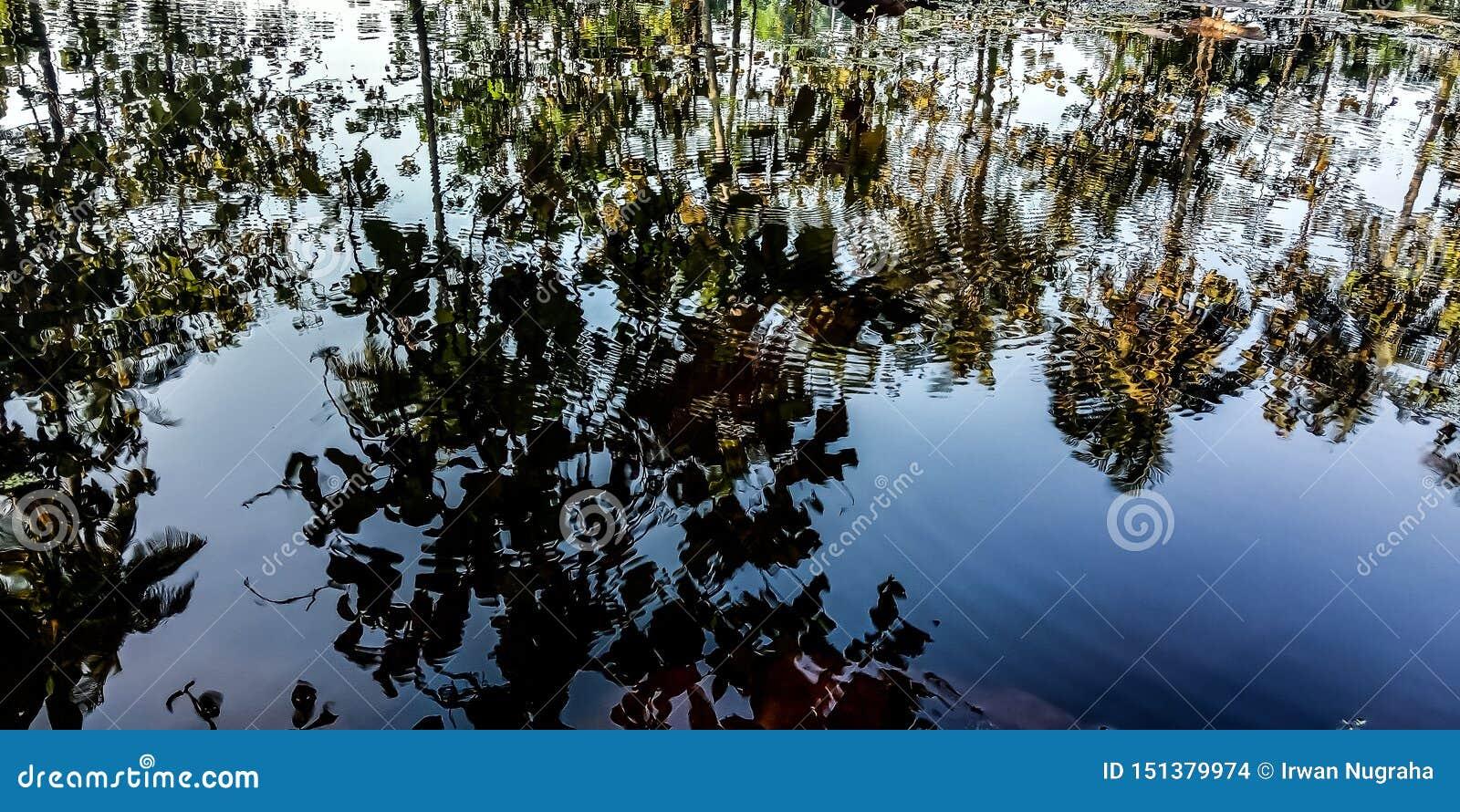 Sombras da água e da árvore