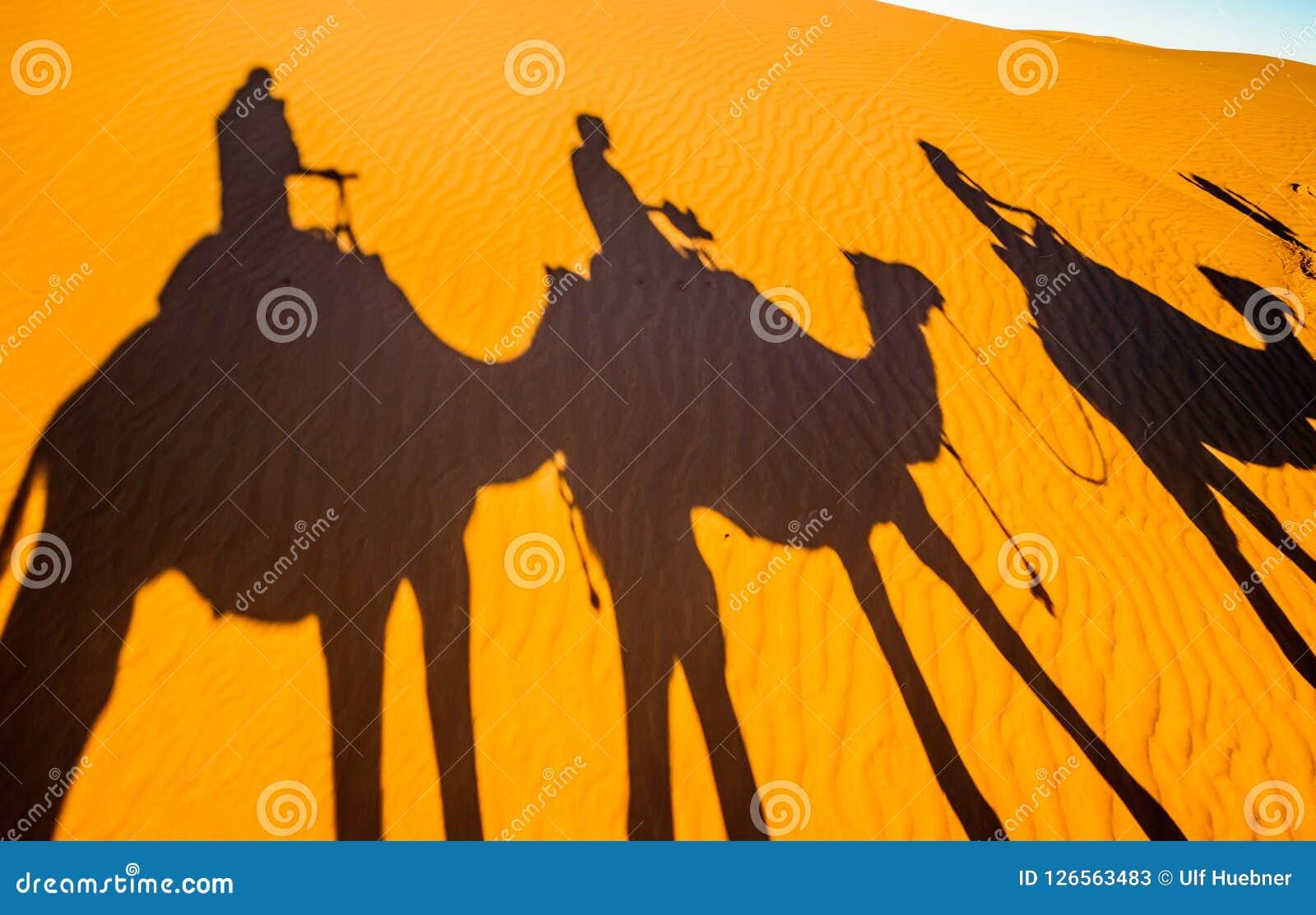 Sombras de camellos en la arena del desierto del Sáhara - Marruecos