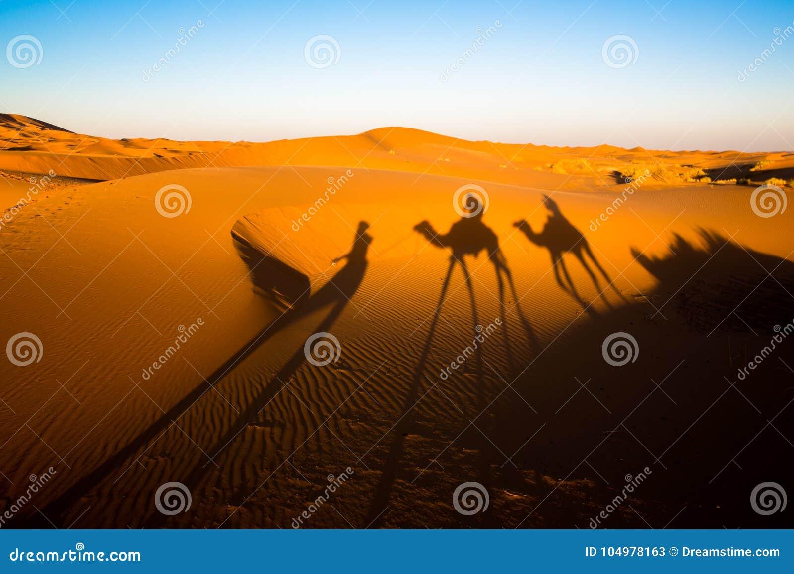 Sombras de la tarde de una caravana del camello en el Sáhara