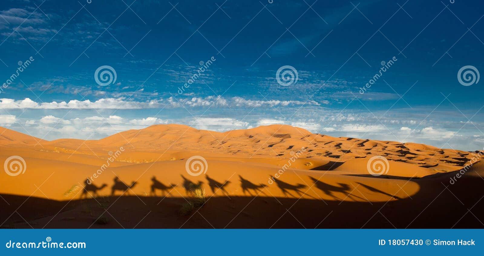 Sombras del camello en el Sáhara