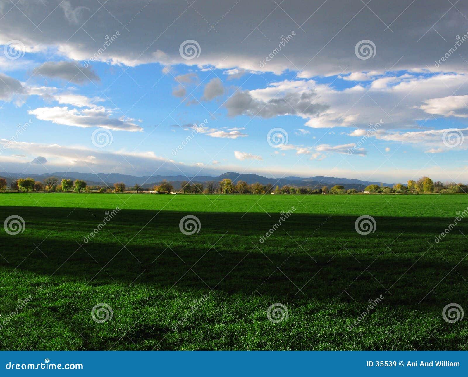 Sombras no prado