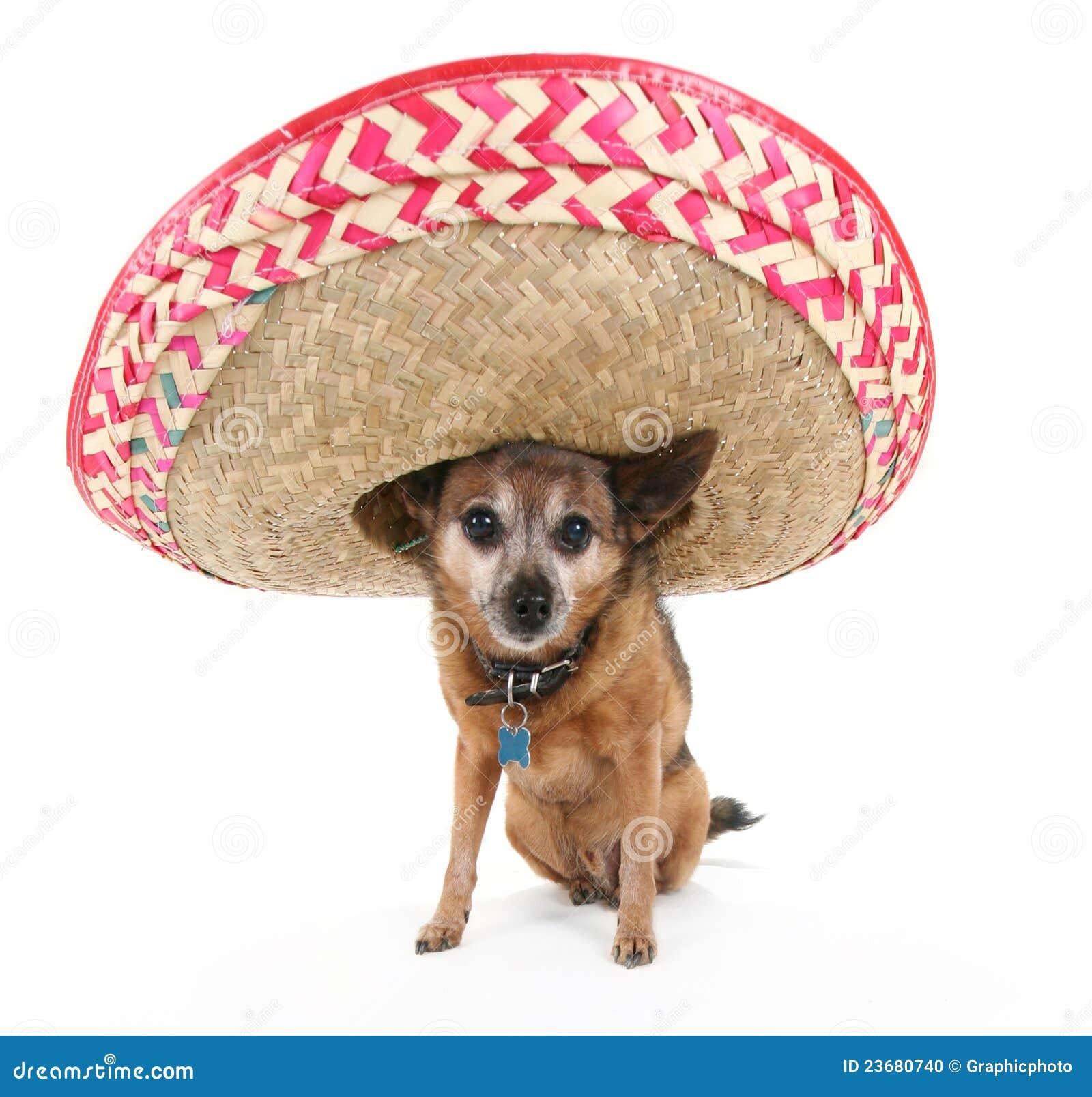 Mexican Dog Collar