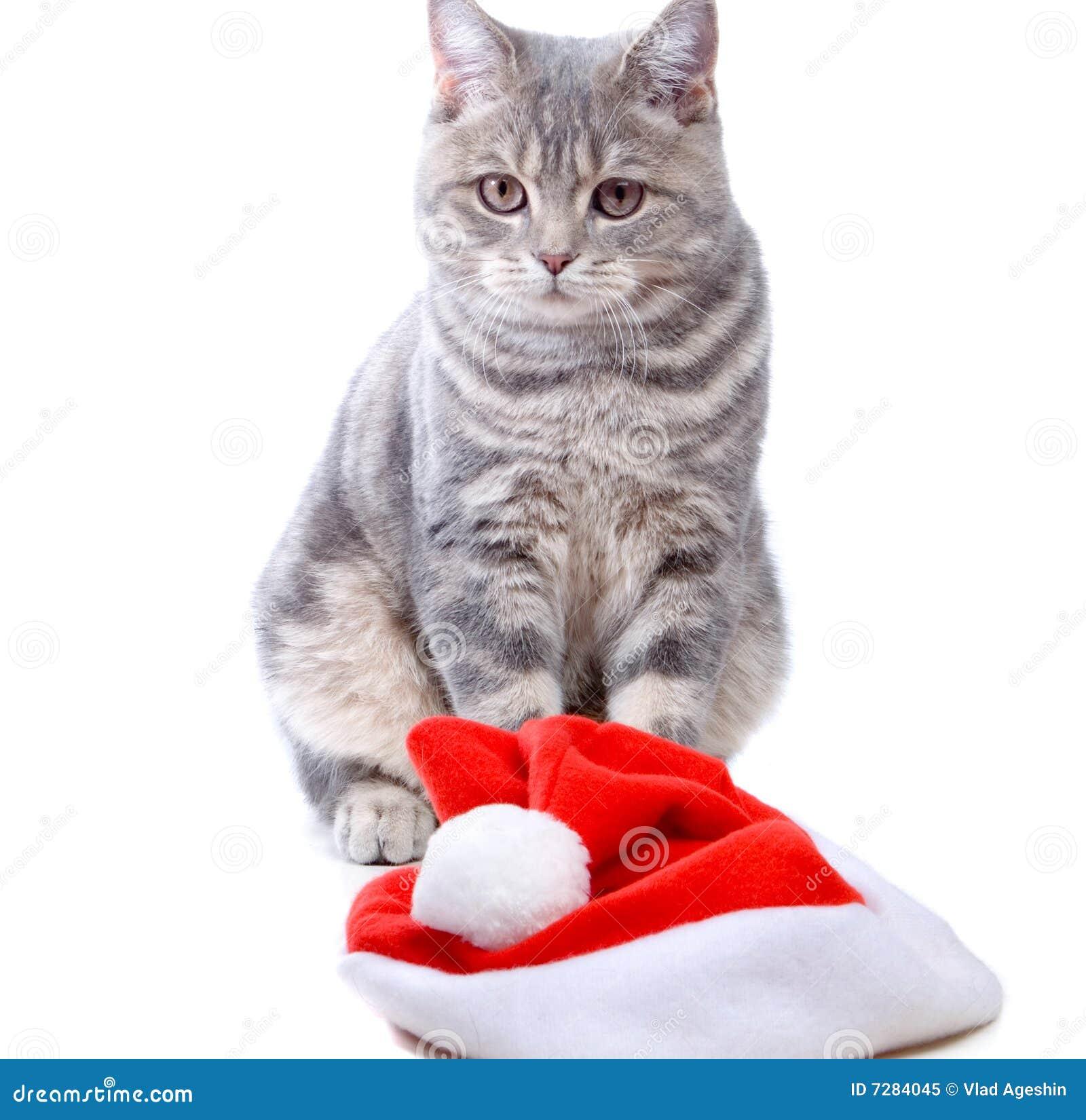 Sombrero y gato