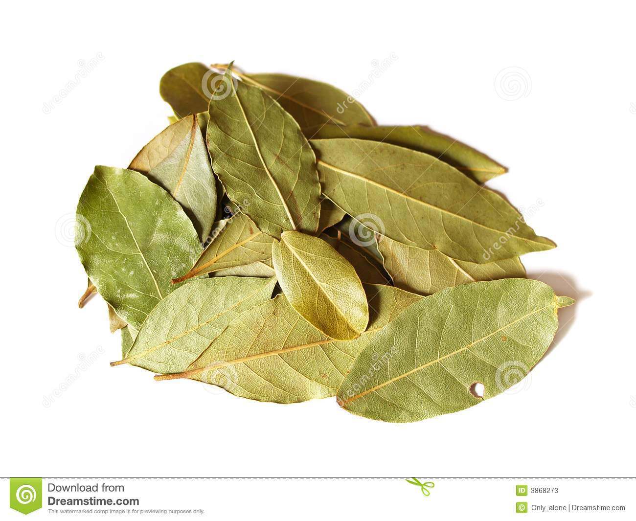 Some bay leaves stock photos image 3868273 - Cook bay leaves ...