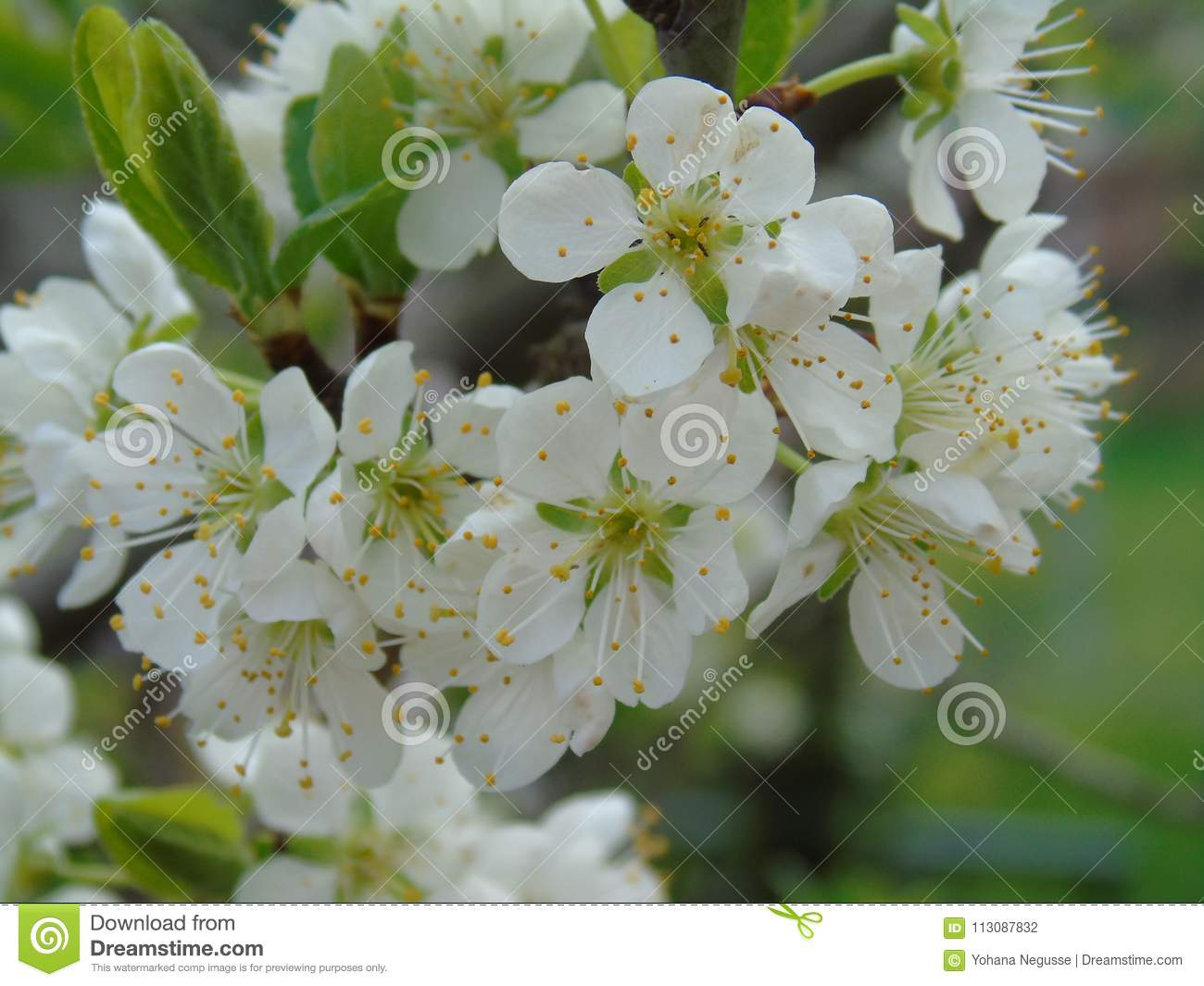 Some beautiful flowers from the village stock photo image of download some beautiful flowers from the village stock photo image of botany blossom izmirmasajfo