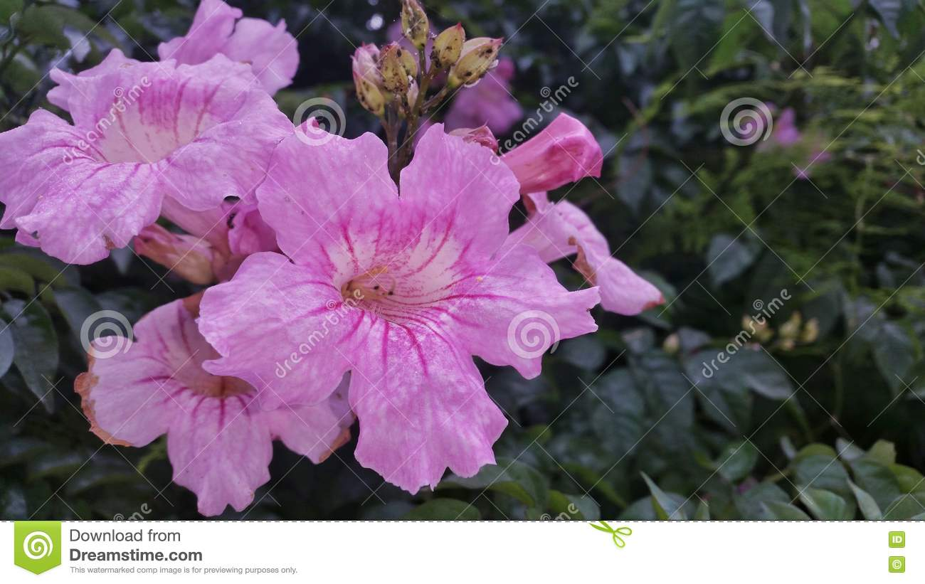 Some Beautiful Flowers In A Park Stock Image - Image of some, park ...