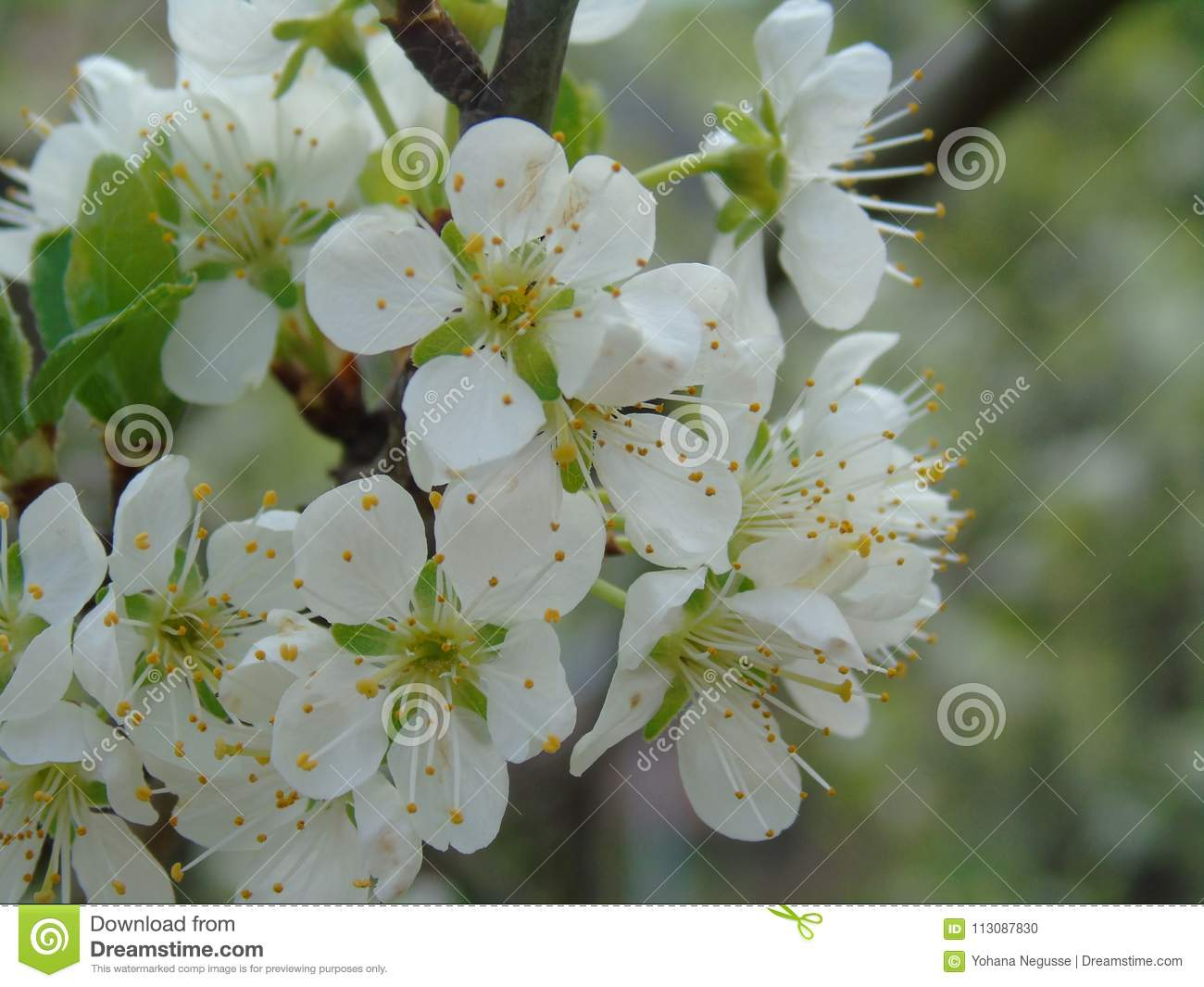 Some beautiful flowers from the village stock photo image of apple download some beautiful flowers from the village stock photo image of apple background izmirmasajfo