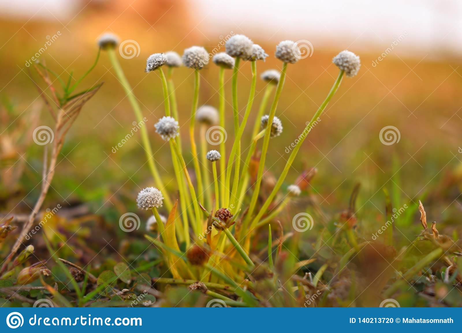 Some beautiful tiny flowers of grass