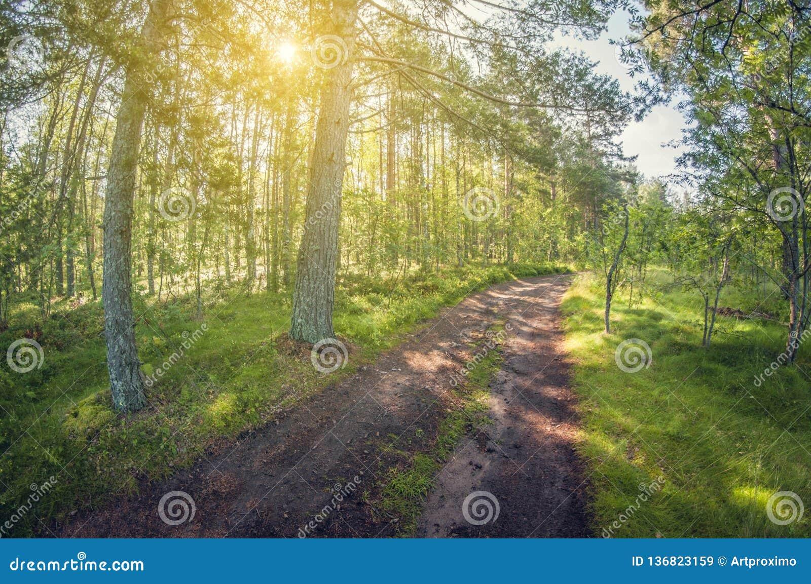 SOMMAREN landskap Härlig skoggrusväg fisheyedistorsionslins