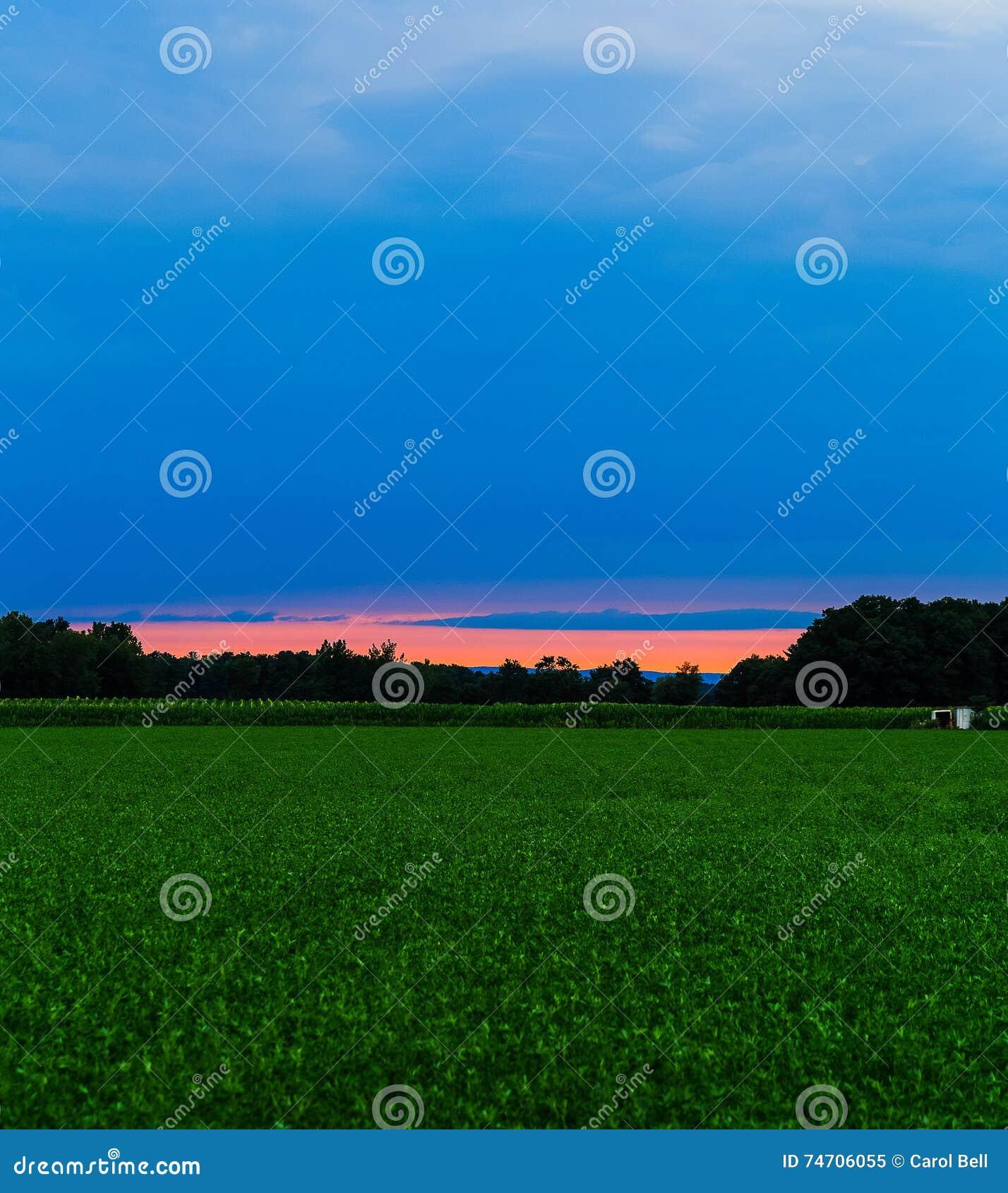 Sommarfält i Hudson Valley på solnedgången