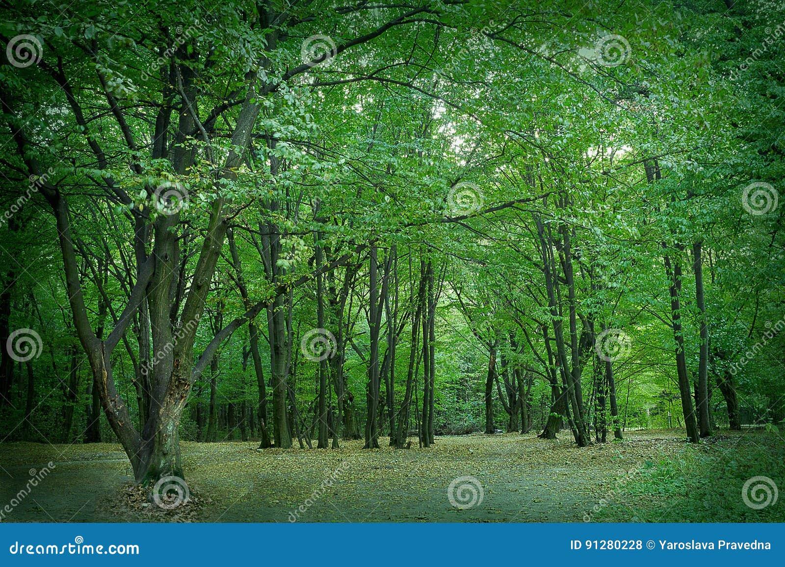 Sommarlövskog