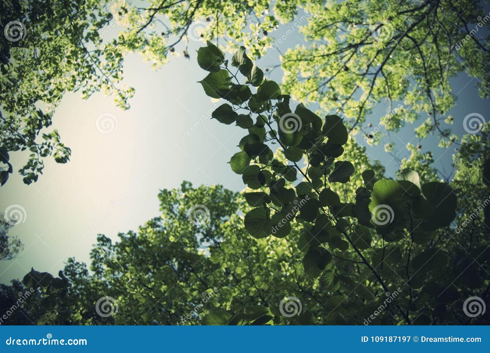 Sommarsidor och stora ljus