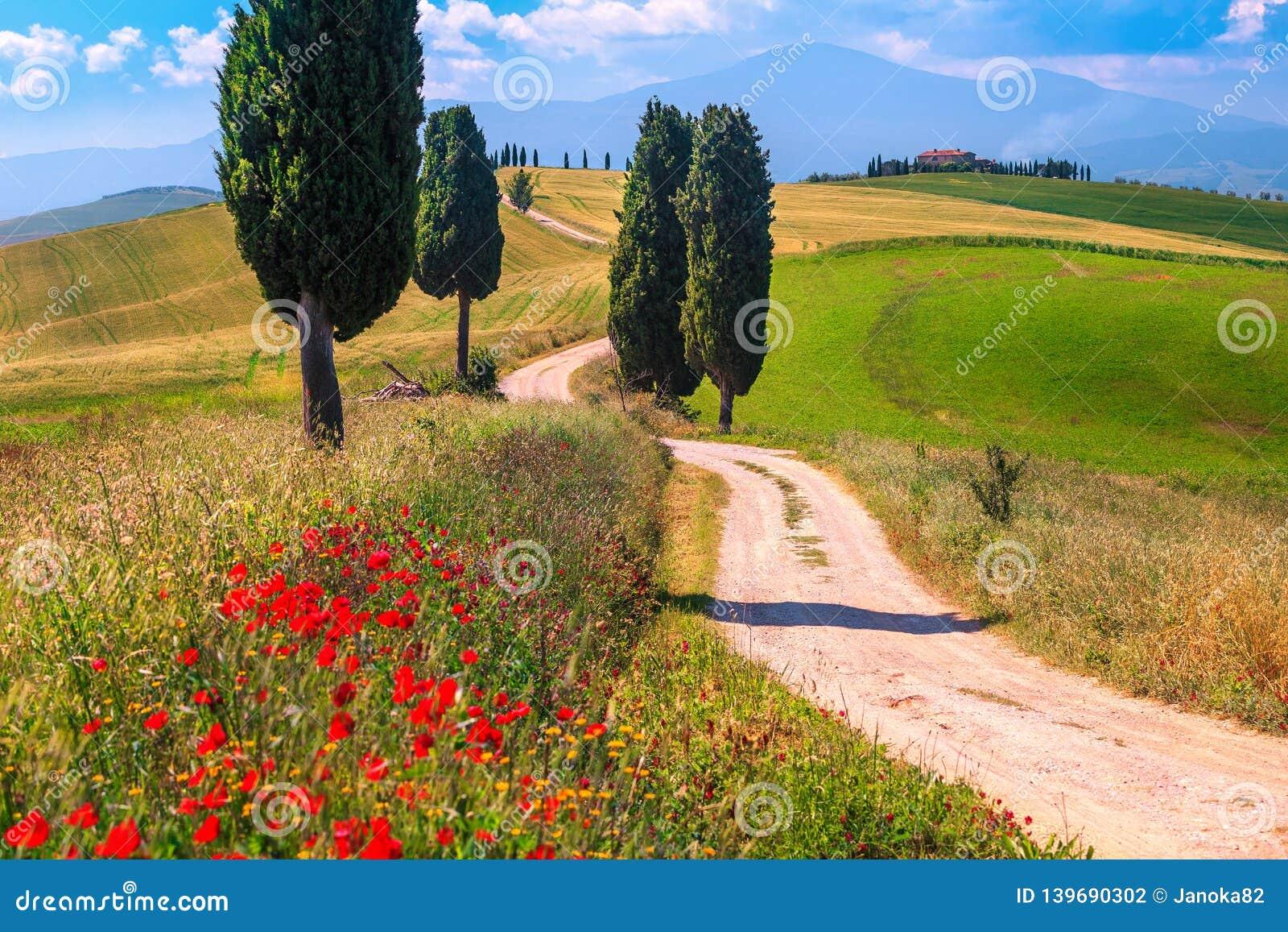 SommarTuscany landskap med kornfält och den lantliga vägen, Italien