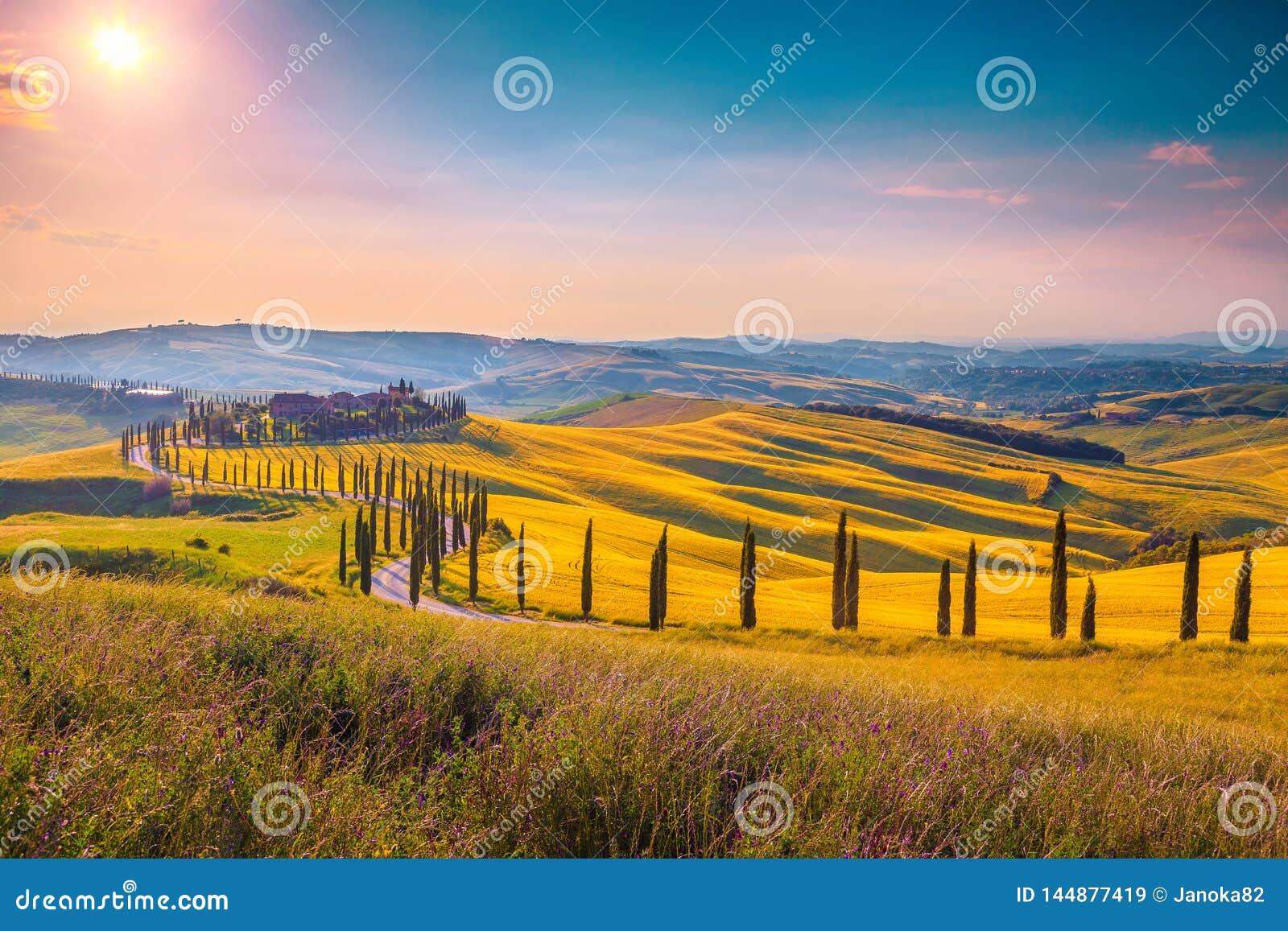 SommarTuscany landskap p? eftermiddagen med den kr?kta lantliga v?gen, Italien