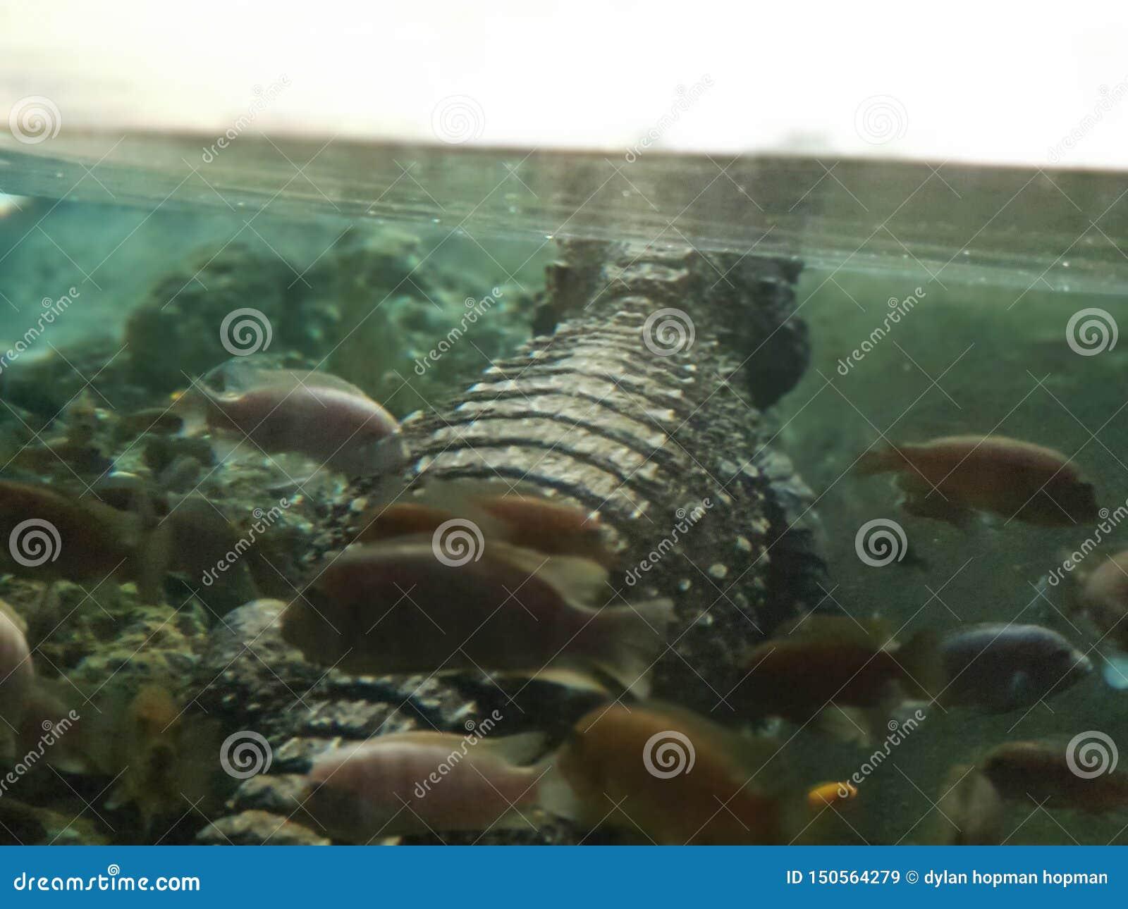 Sommeil avec les poissons