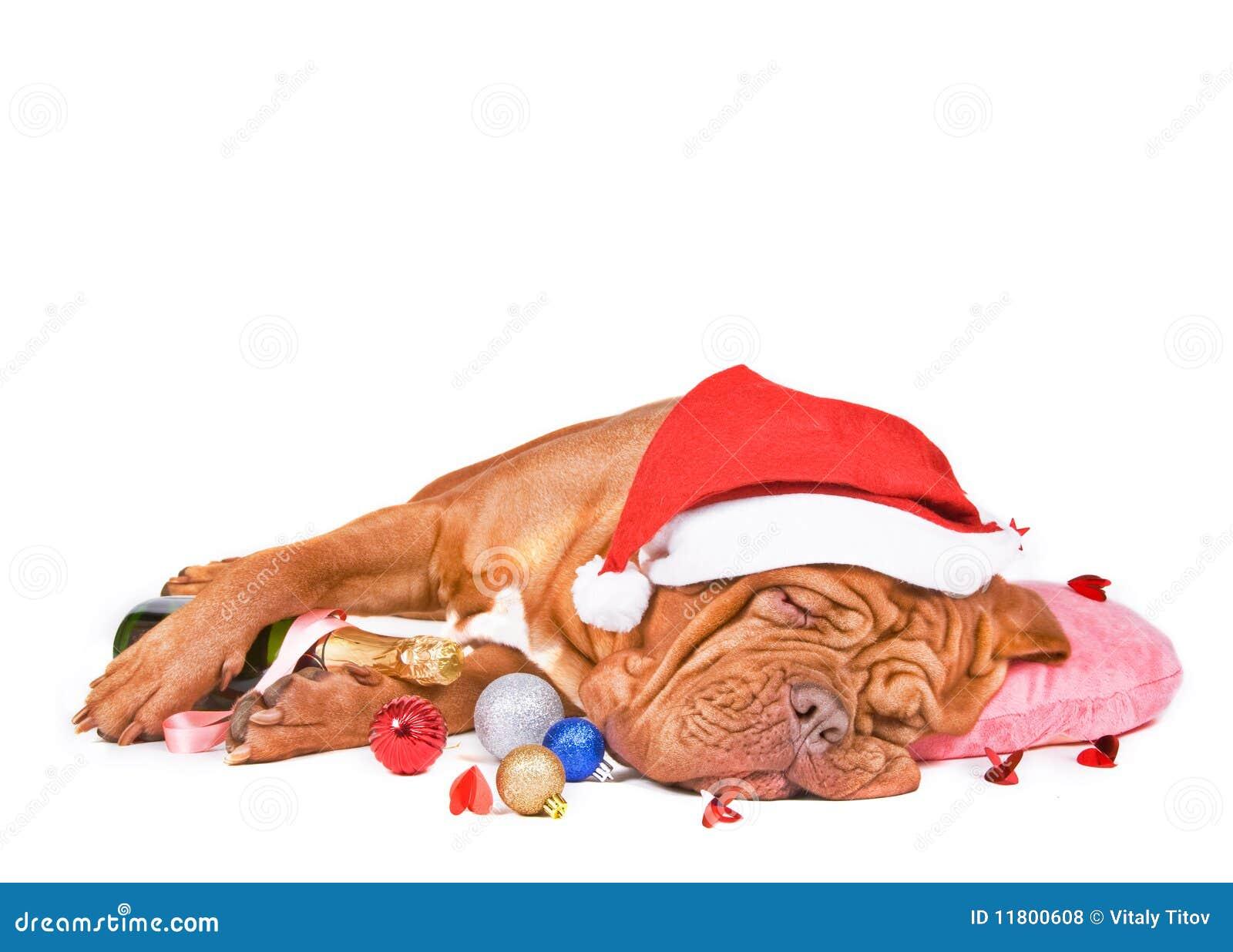 Sommeil de crabot de Santa