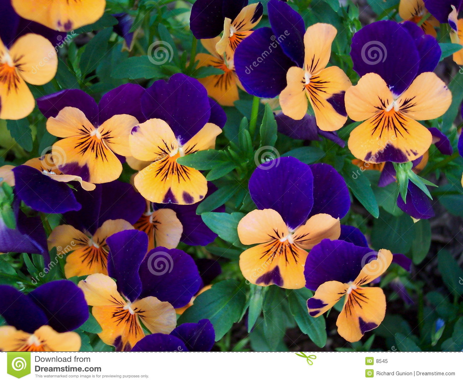Sommer-Blumen