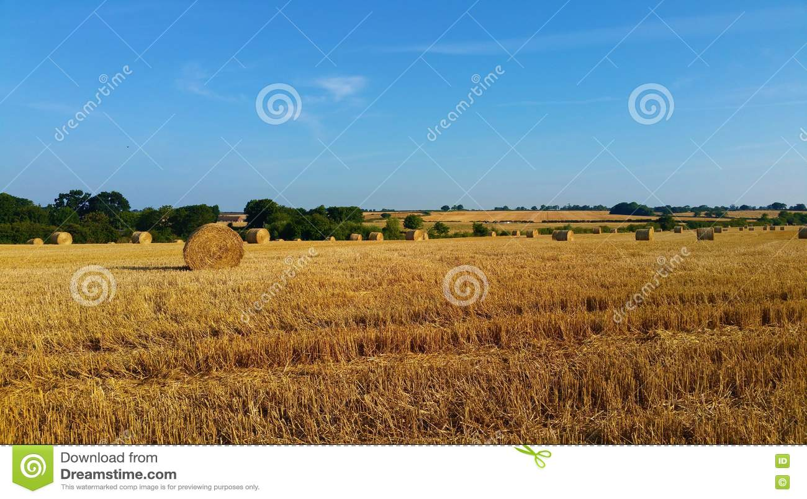 Sommer Hay Fields