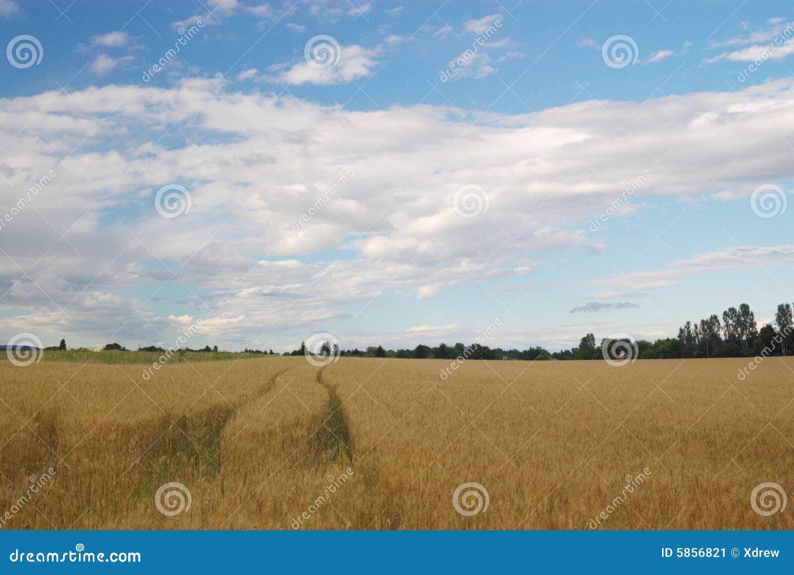 Sommer landwirtschaftliches lanscape