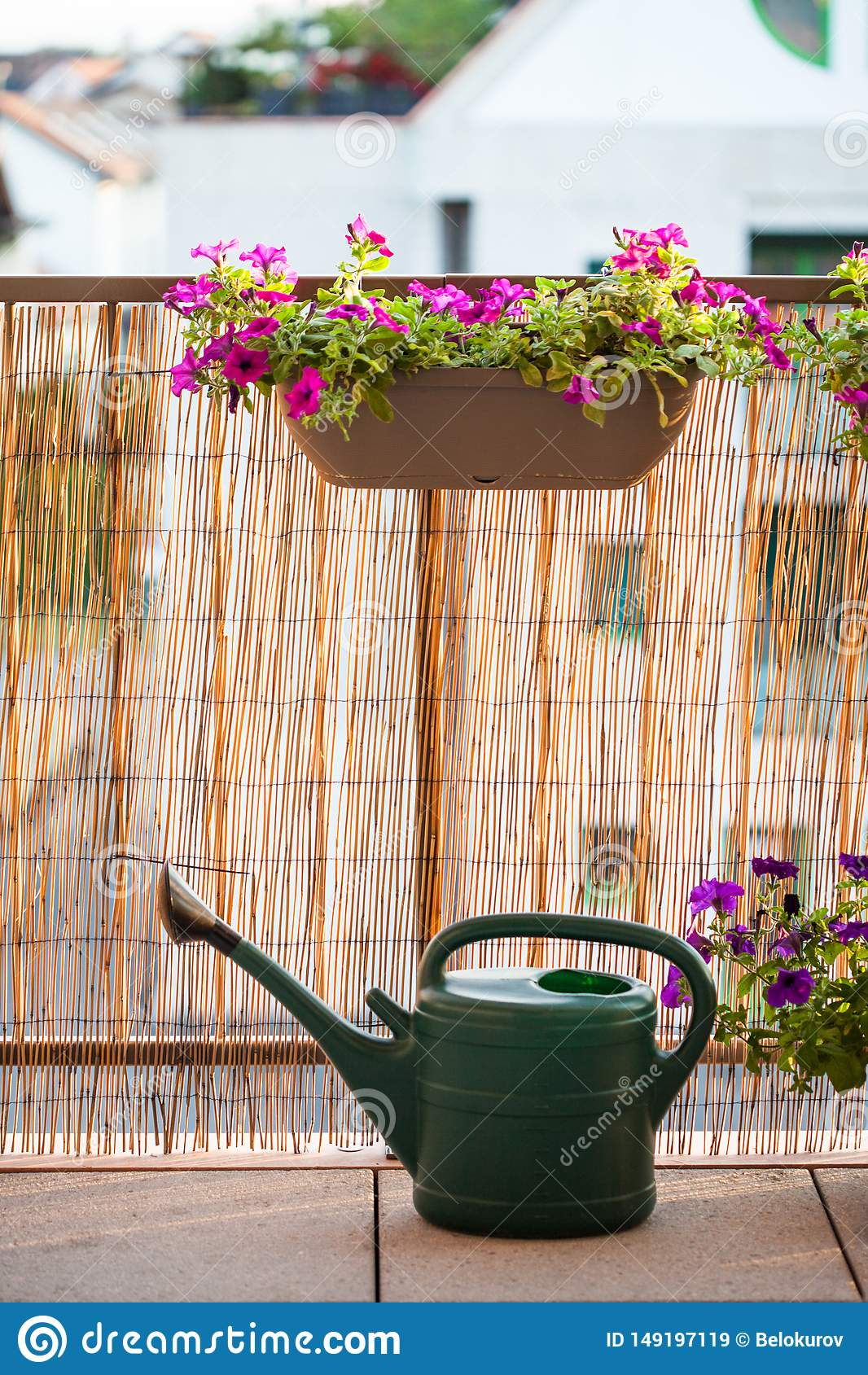 Sommerbalkon, der mit Petunienblumen im Garten arbeitet