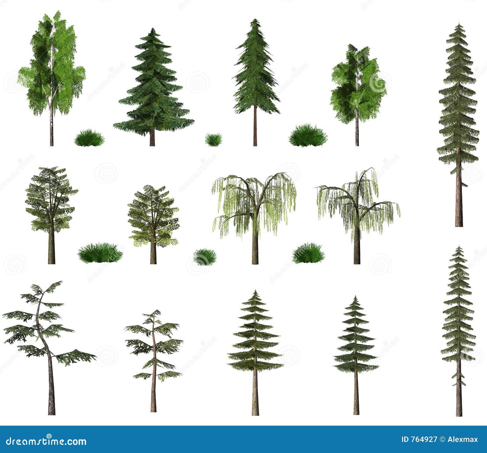 Sommerbaum-Anschlagtafelansammlung auf Weiß