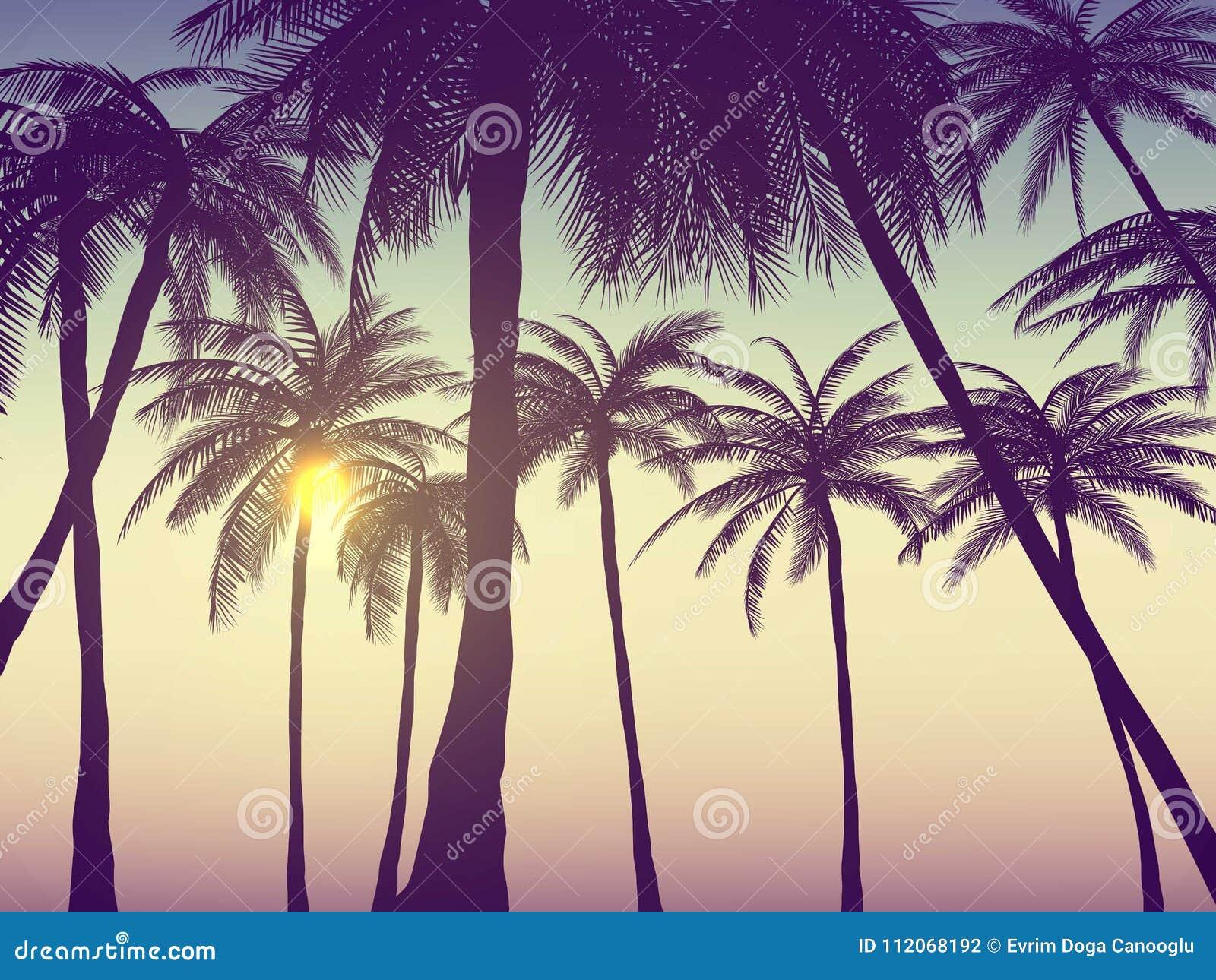 Sommerkalifornien Tumblr Hintergründe Stellten Mit Palmen Himmel