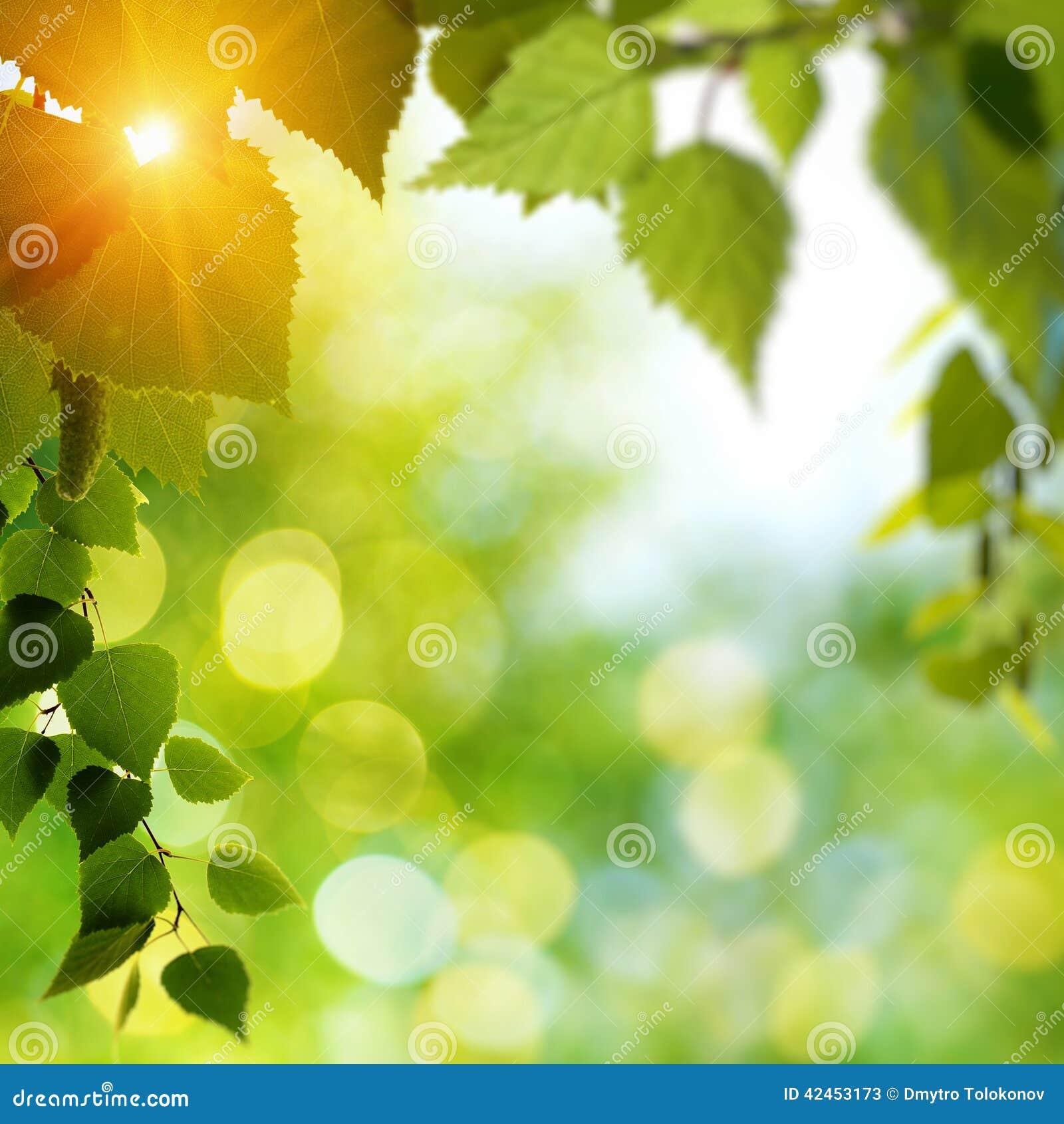 Sommertag im Wald mit dem Birkenzweig