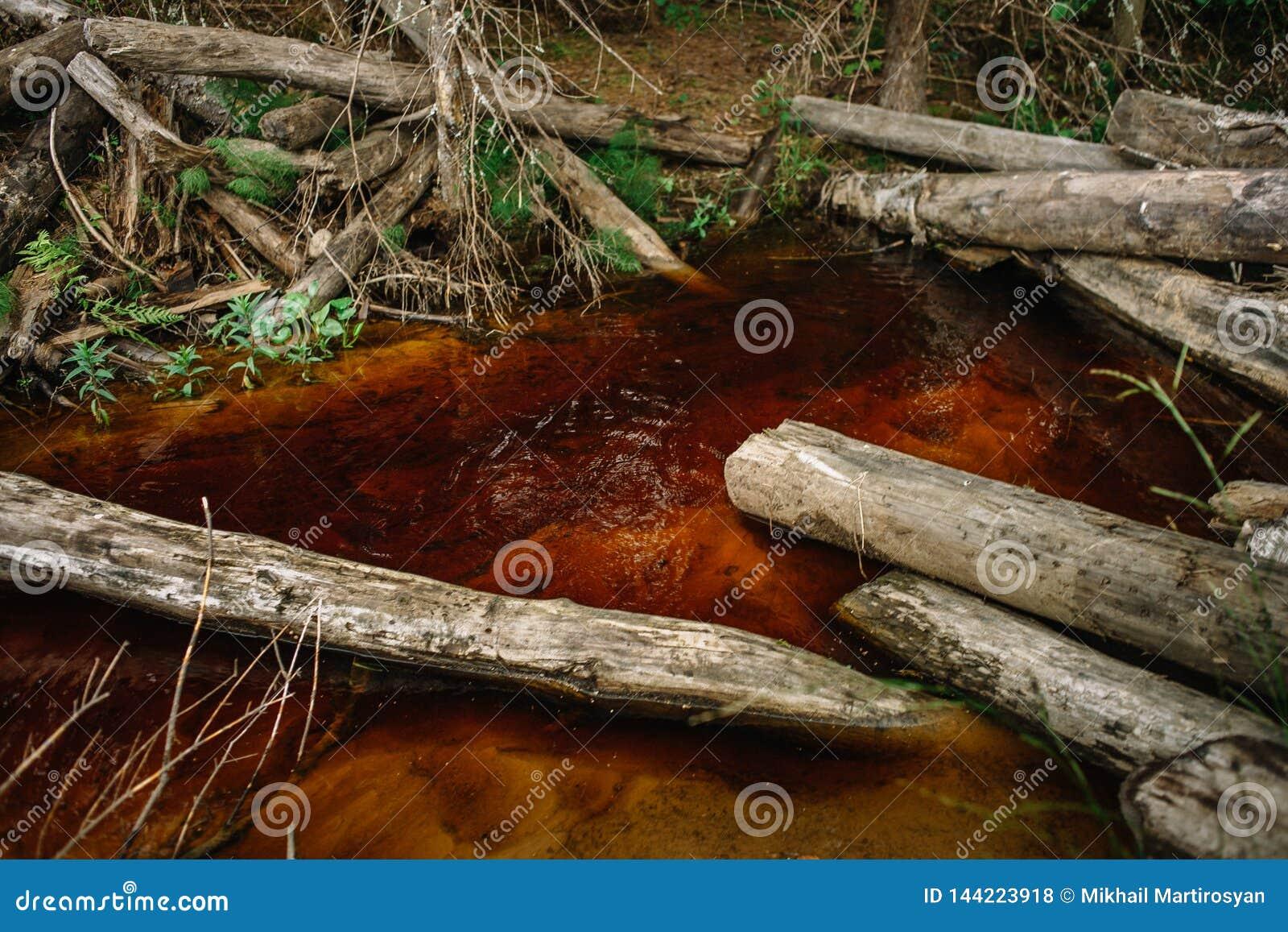 Sommerwaldstrom Rostiges Wasser Holz im Wasser