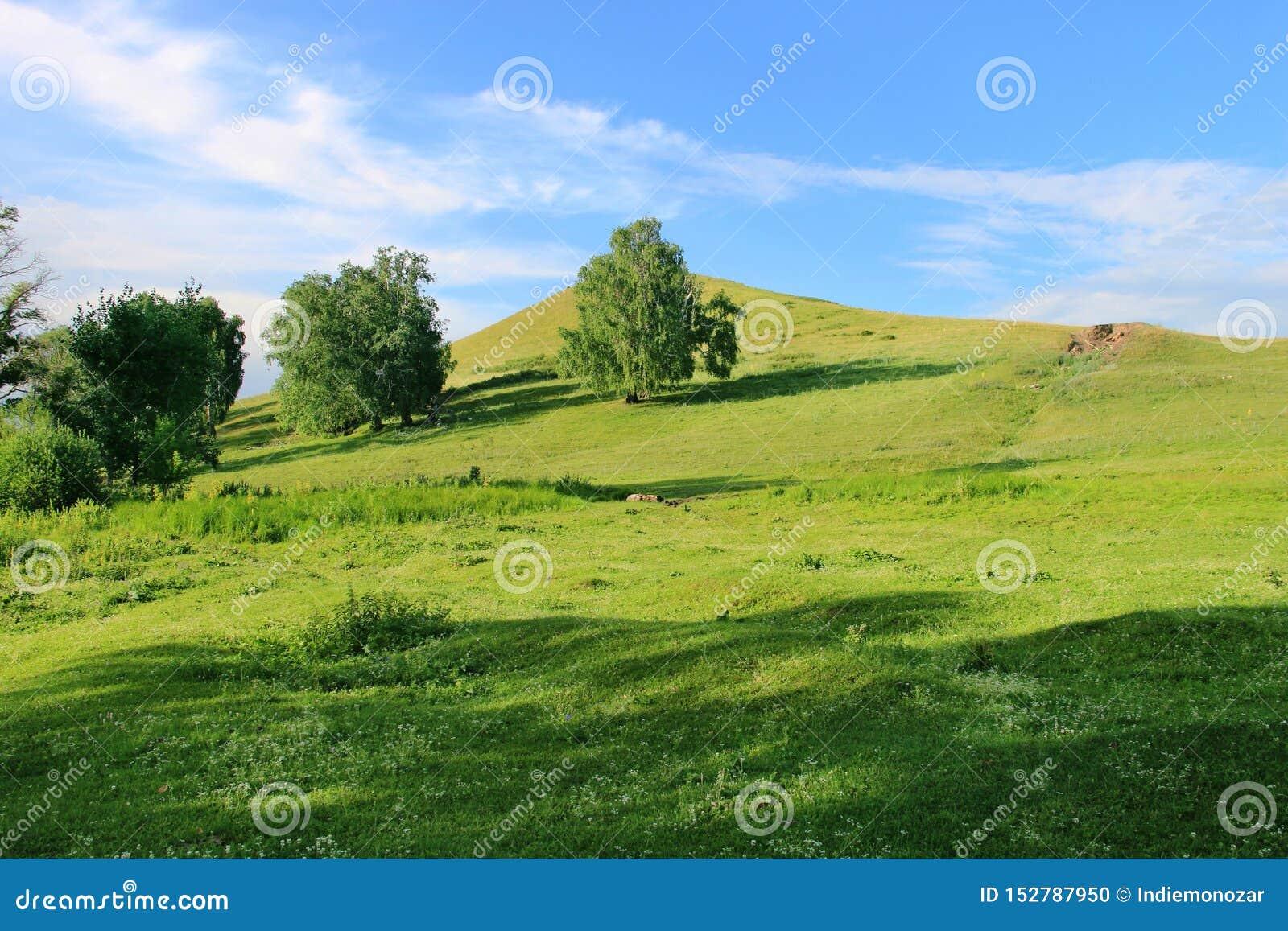 Sommige bomen op een groene heuvel bij één de zomerdag