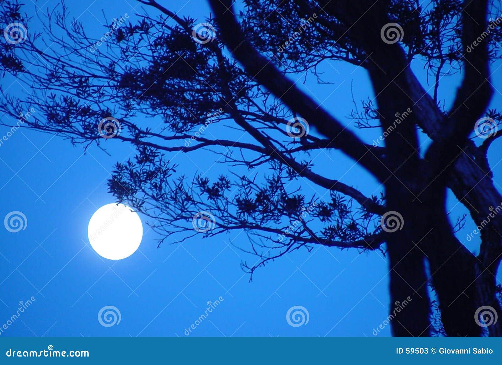 Sonata di luce della luna