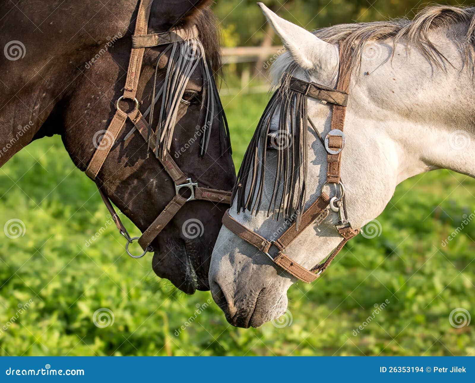 Sonderkommando des Pferdenkopfes