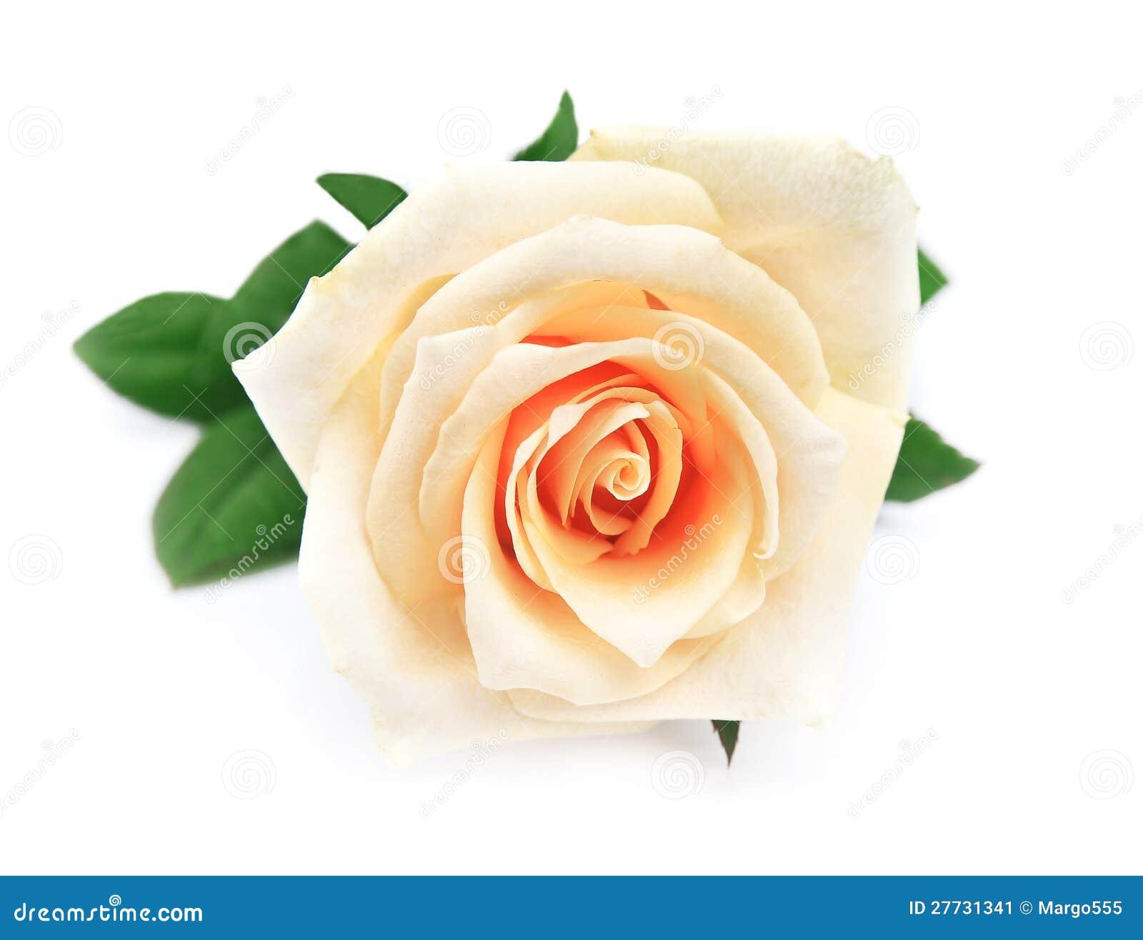 Sondern Sie Rosafarbenes aus