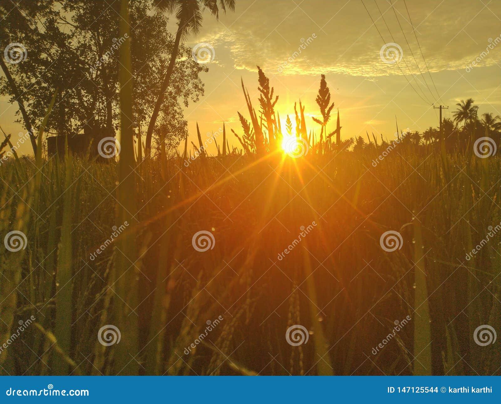 Sonnenaufgänge in Indien