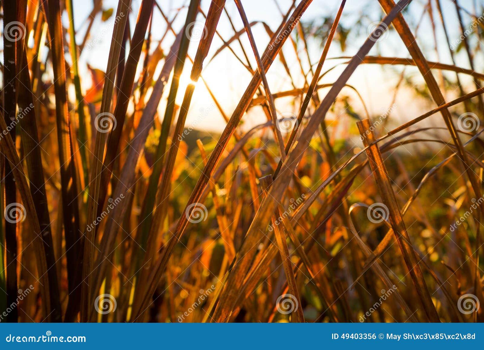 Download Sonnenaufgang über Hügeln stockfoto. Bild von himmel - 49403356