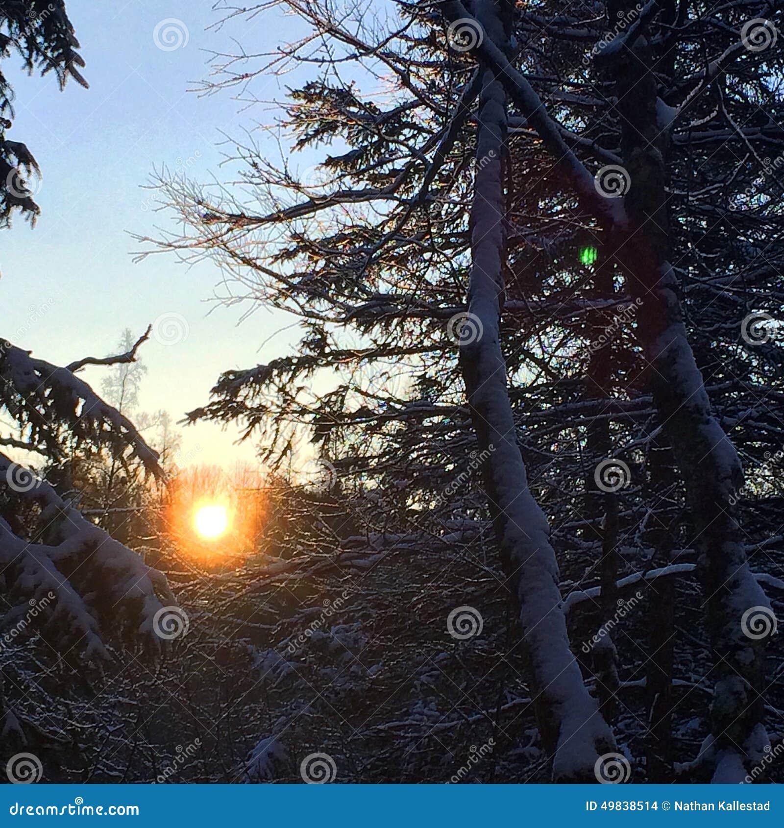 Sonnenaufgang über Sumpf