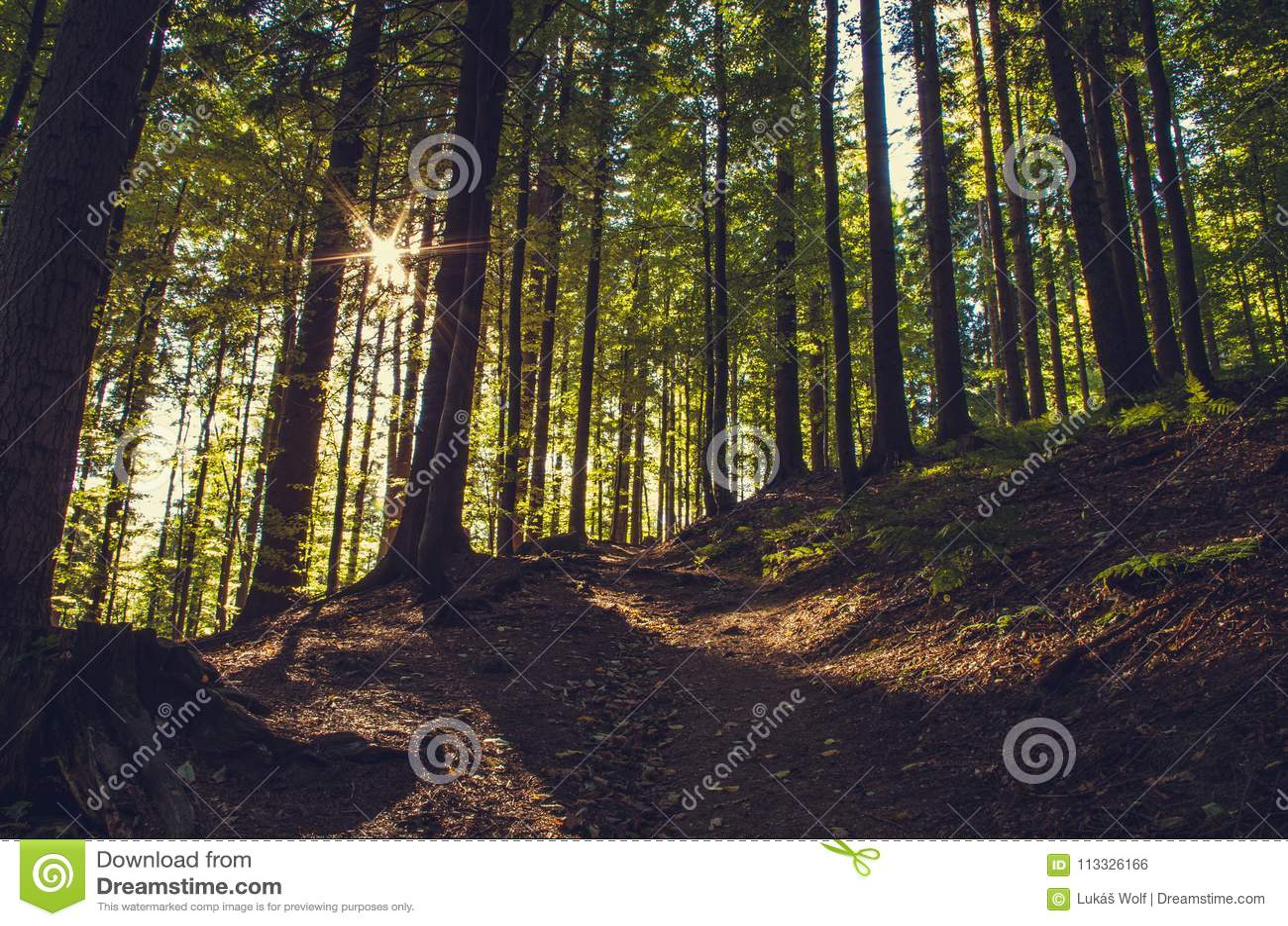 Sonnenaufgang im Gebirgswald