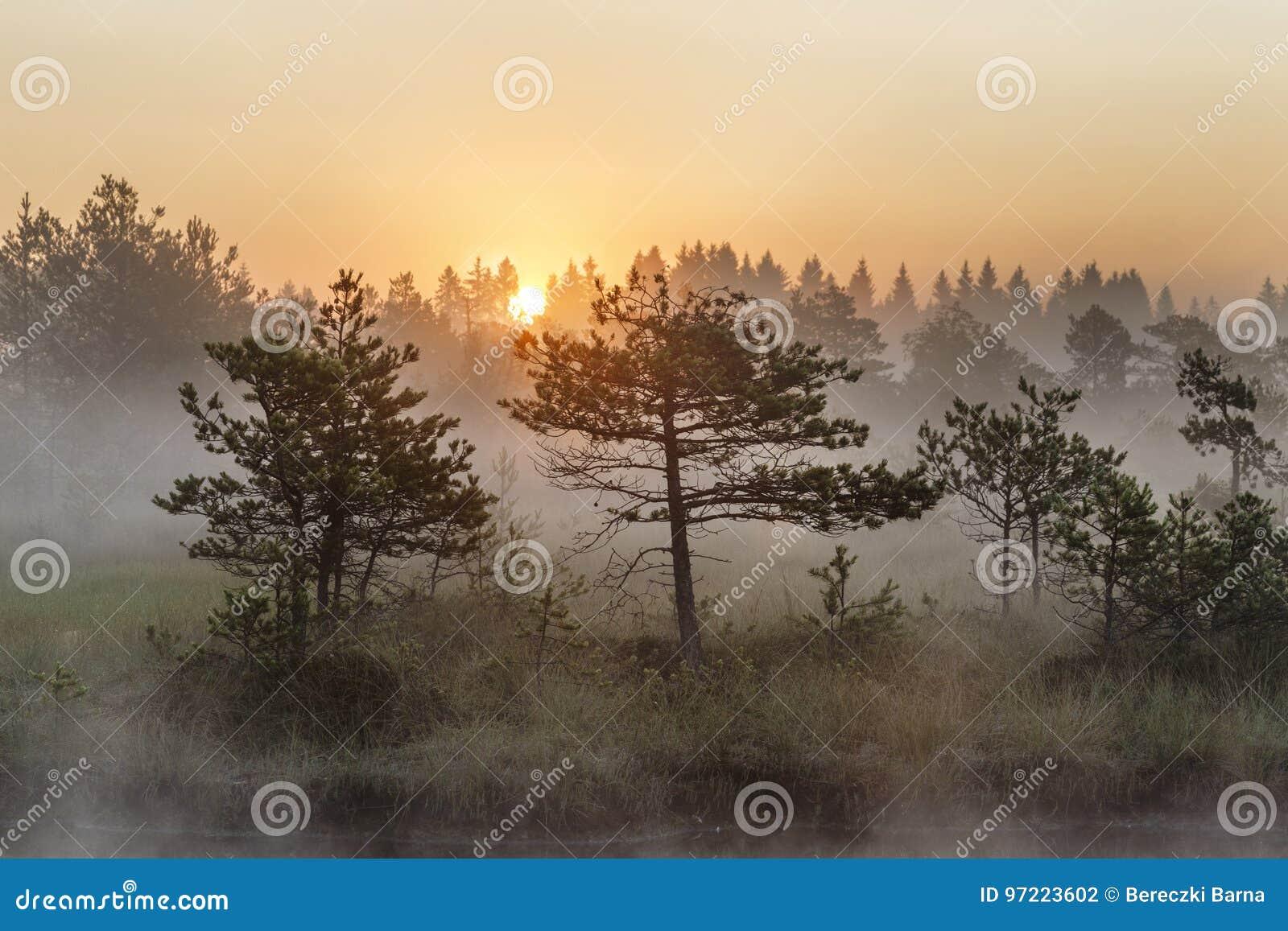 Sonnenaufgang im nebelhaften Sumpf während des Sommers